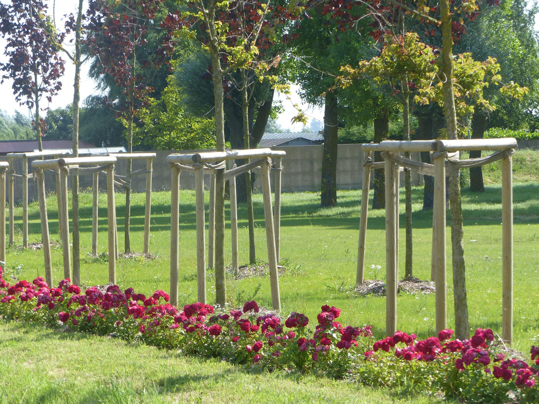 Alignement de jeunes arbres à Loon-Plage avec tuteurage, paillage et barrière fleurie