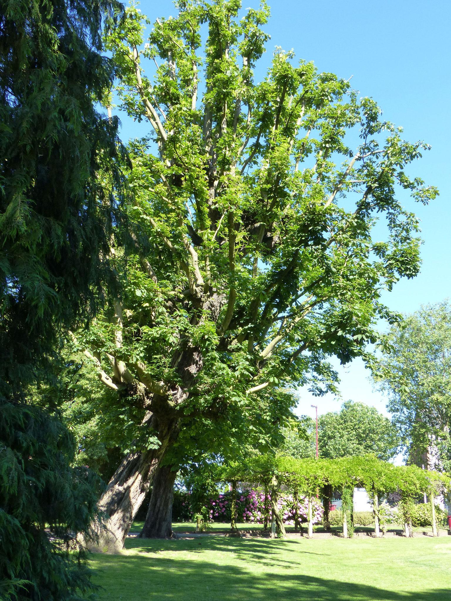 Jardin Public, Hazebrouck