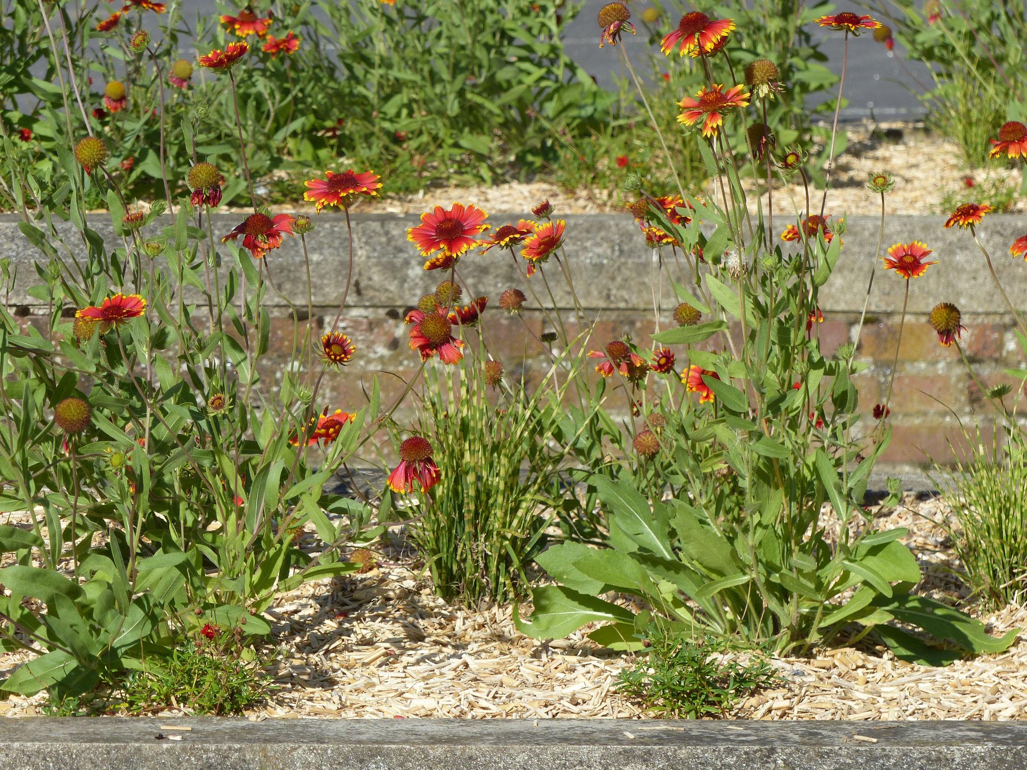 Fleurs à Cuincy