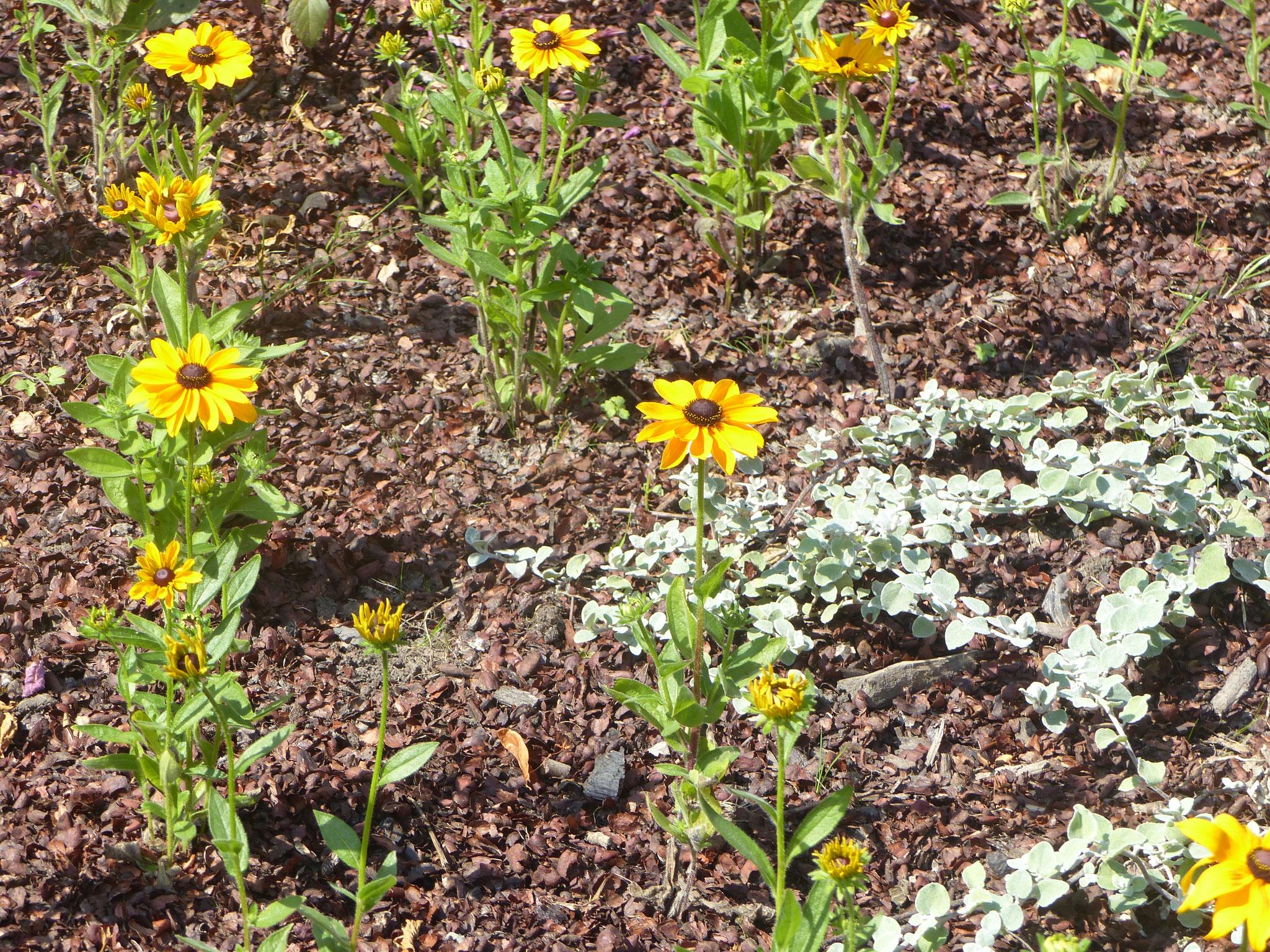 Fleurs à Loon-Plage