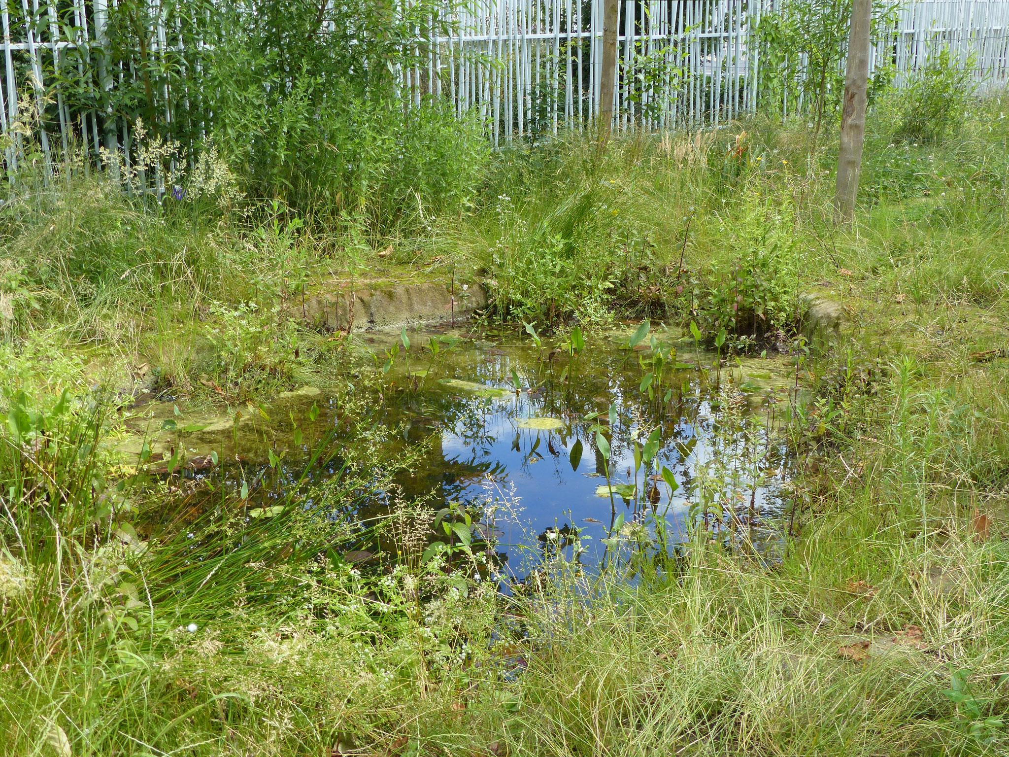 Mini lac dans le Jardin