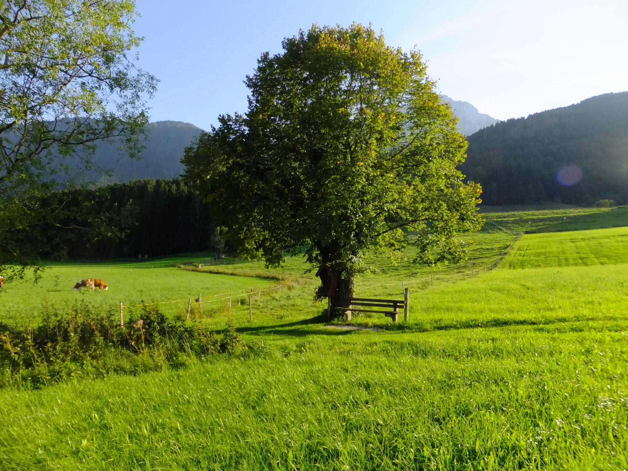 Ruhebankerl am Wanderweg in der Nähe zum Estermannhof