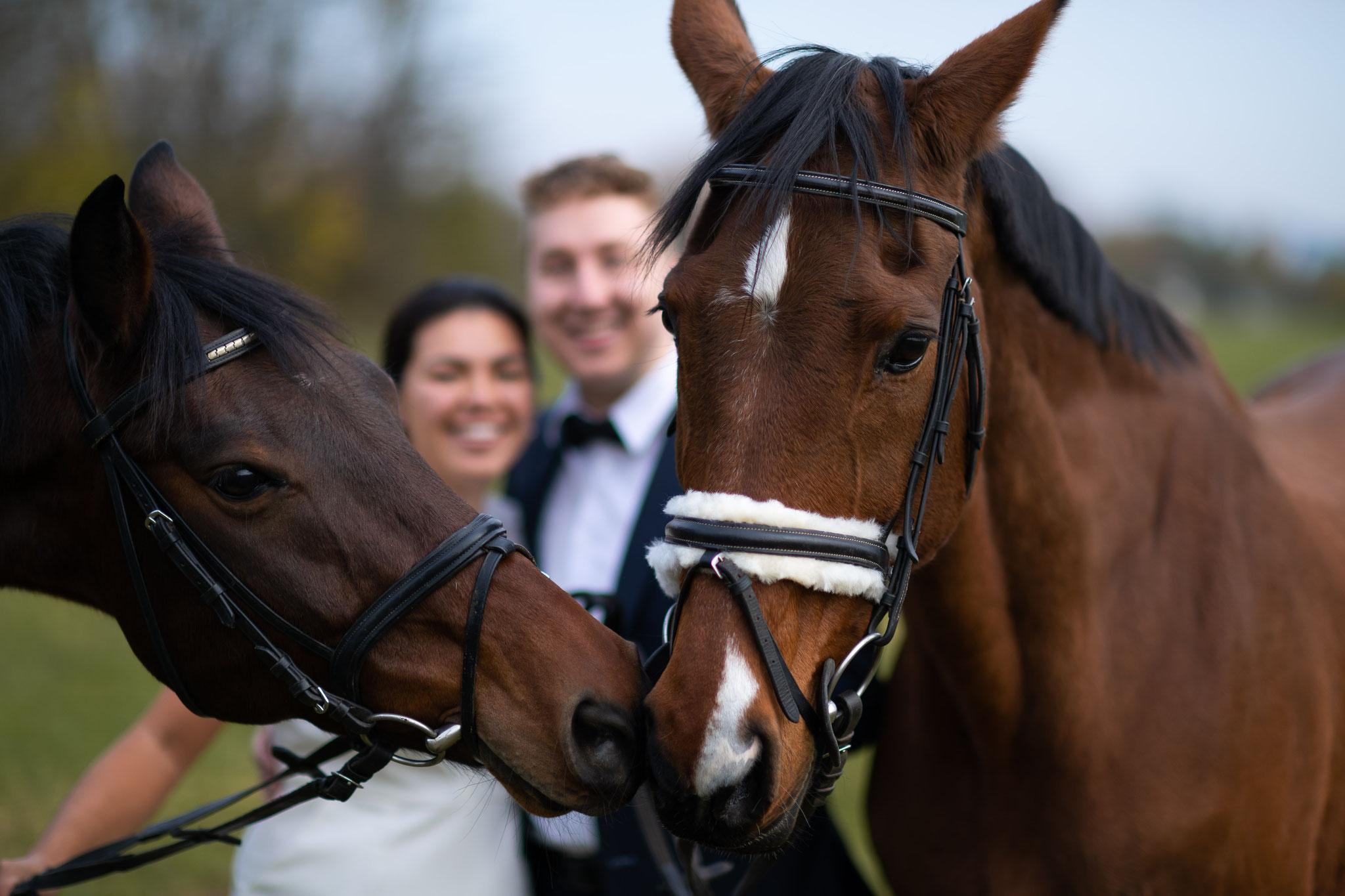 Besondere Aufnahmen mit Pferden in Frankfurt und Hanau