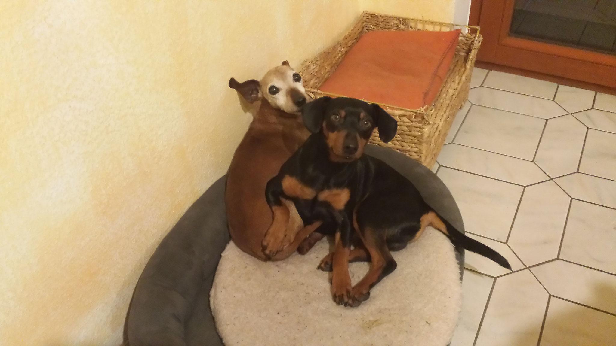 Jamba und Ched beim kuscheln