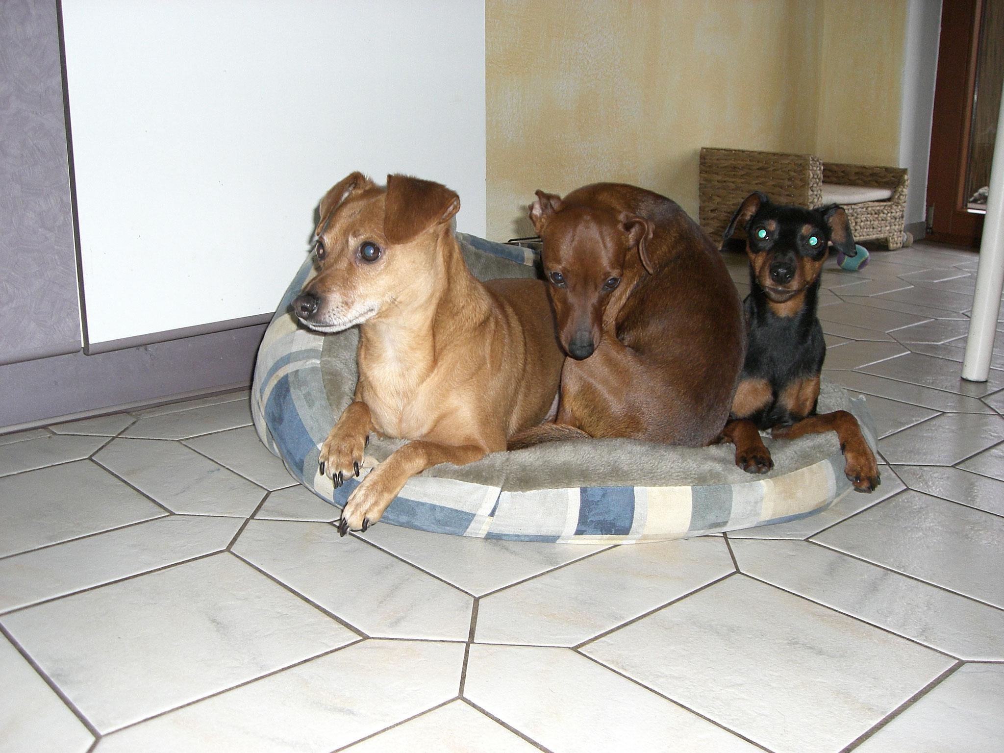 Besuchshund Snoppy Ayla und Paloma