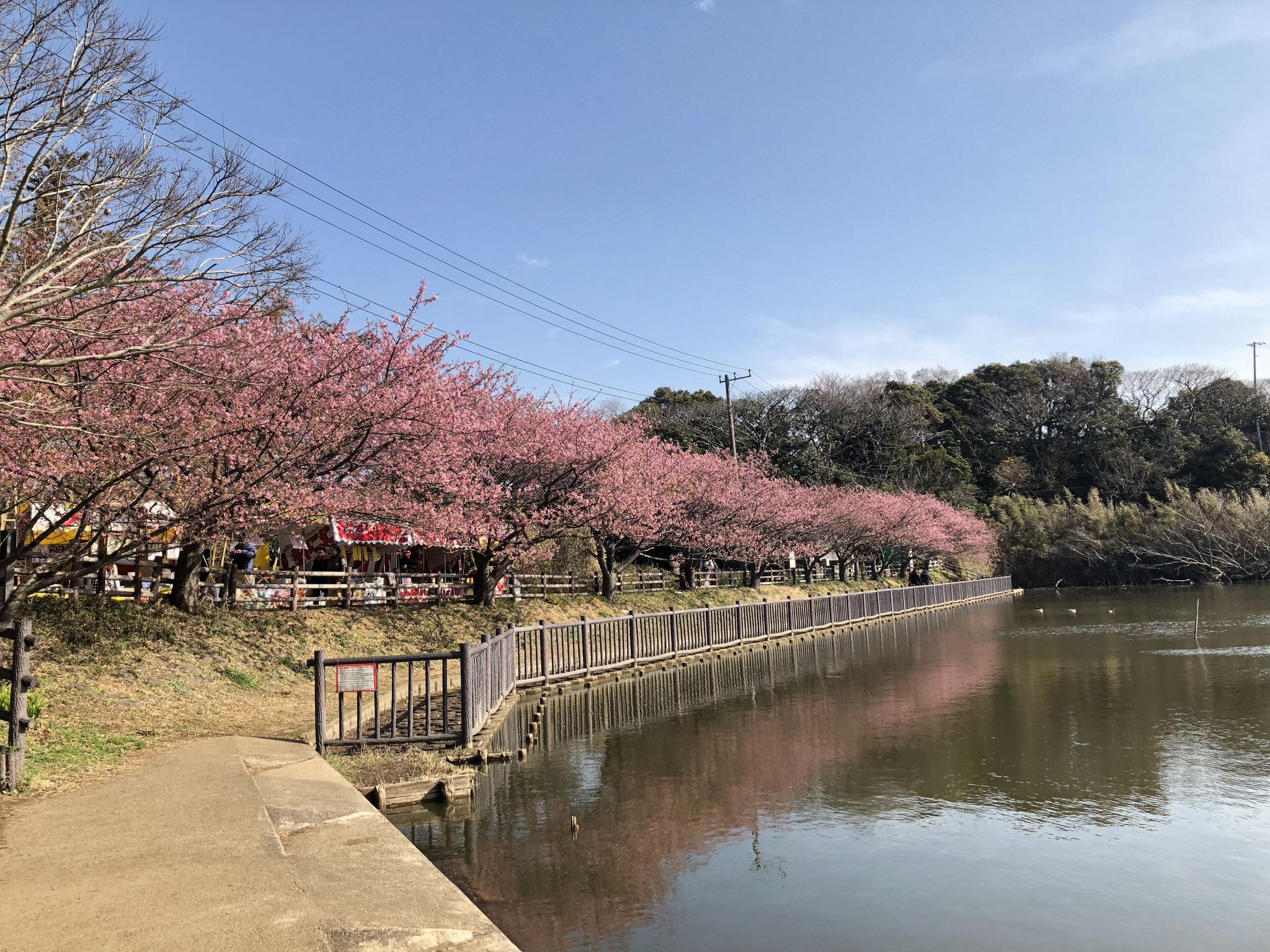 2月23日(土)撮影 小松ヶ池