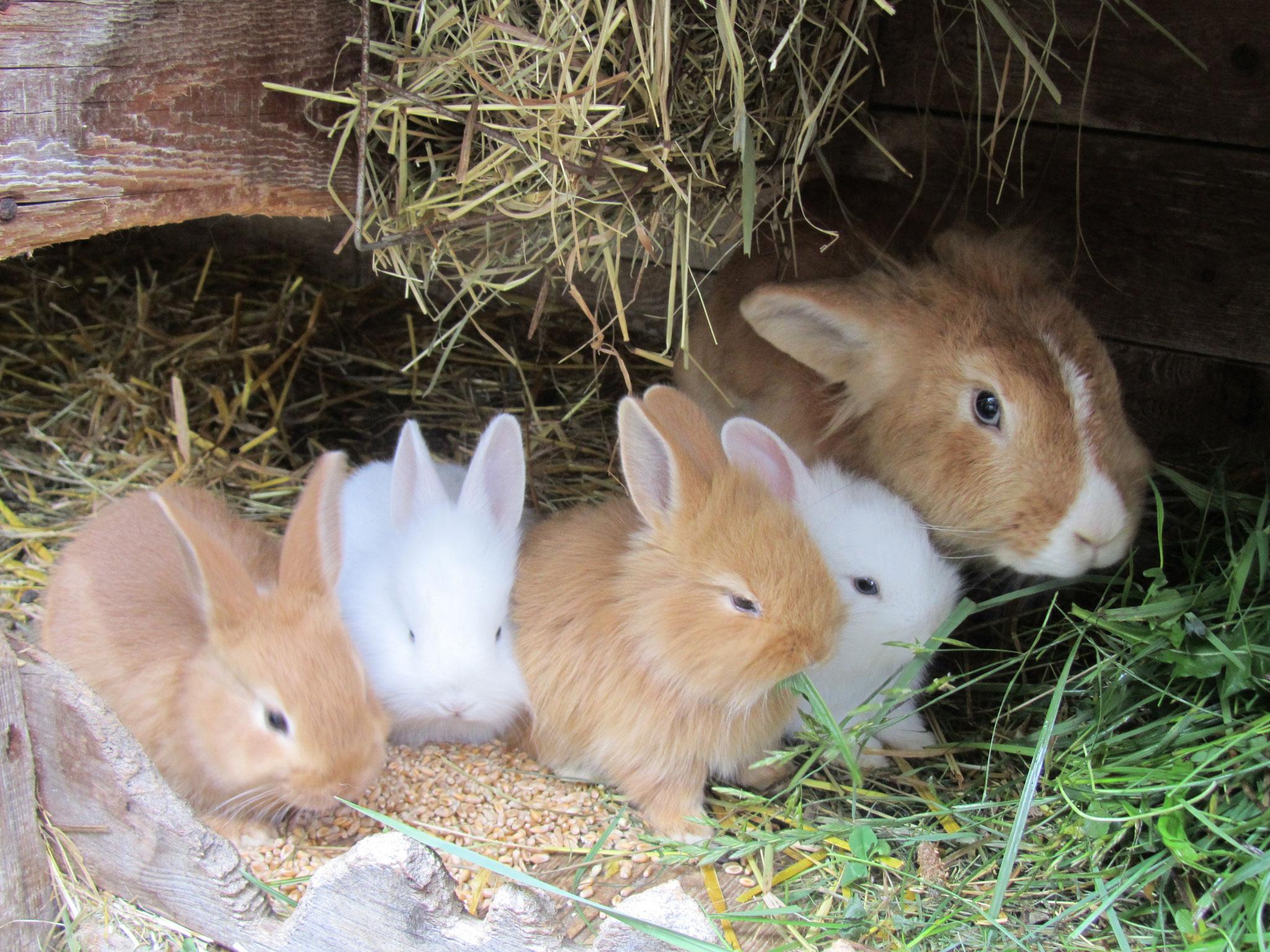 Die Hasenfamilie