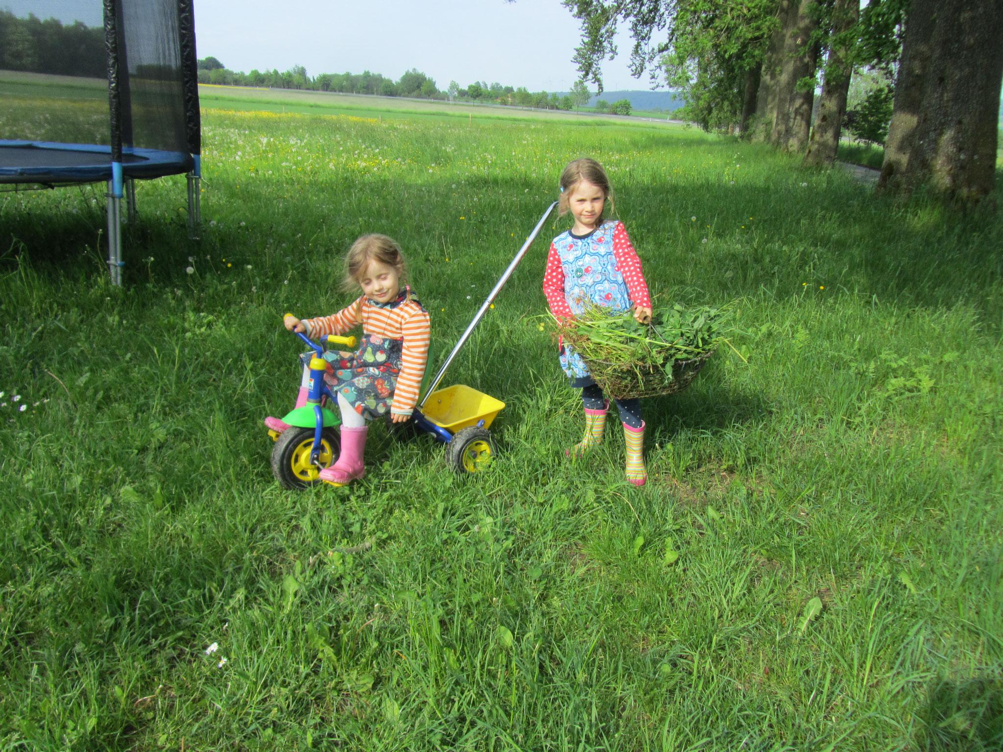 Gras holen für die Hasen