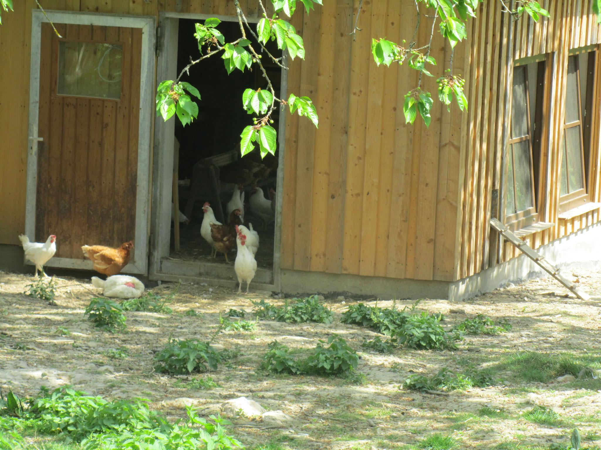 Das Hühnerhaus