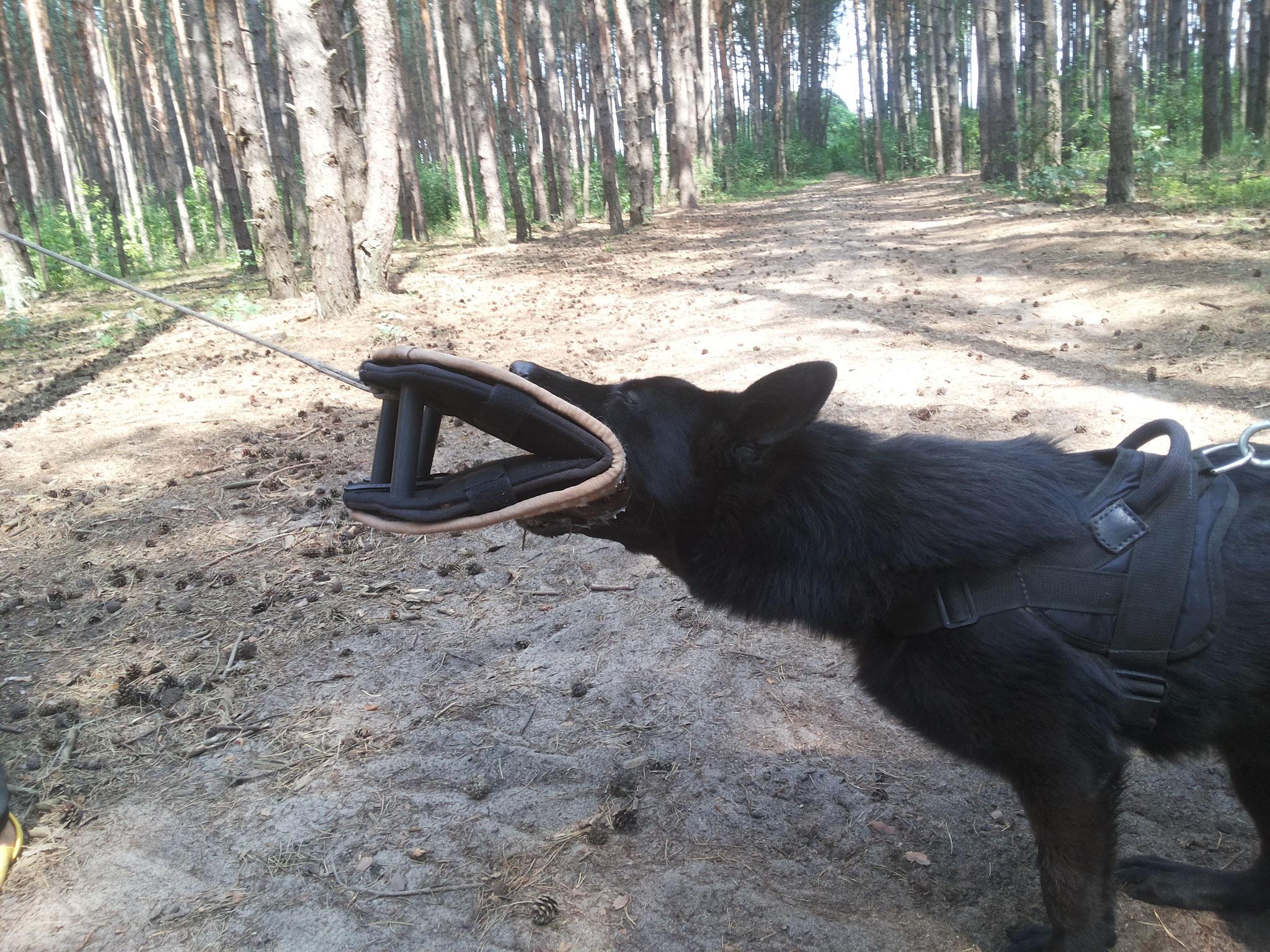 Ватцан (немецкая овчарка)