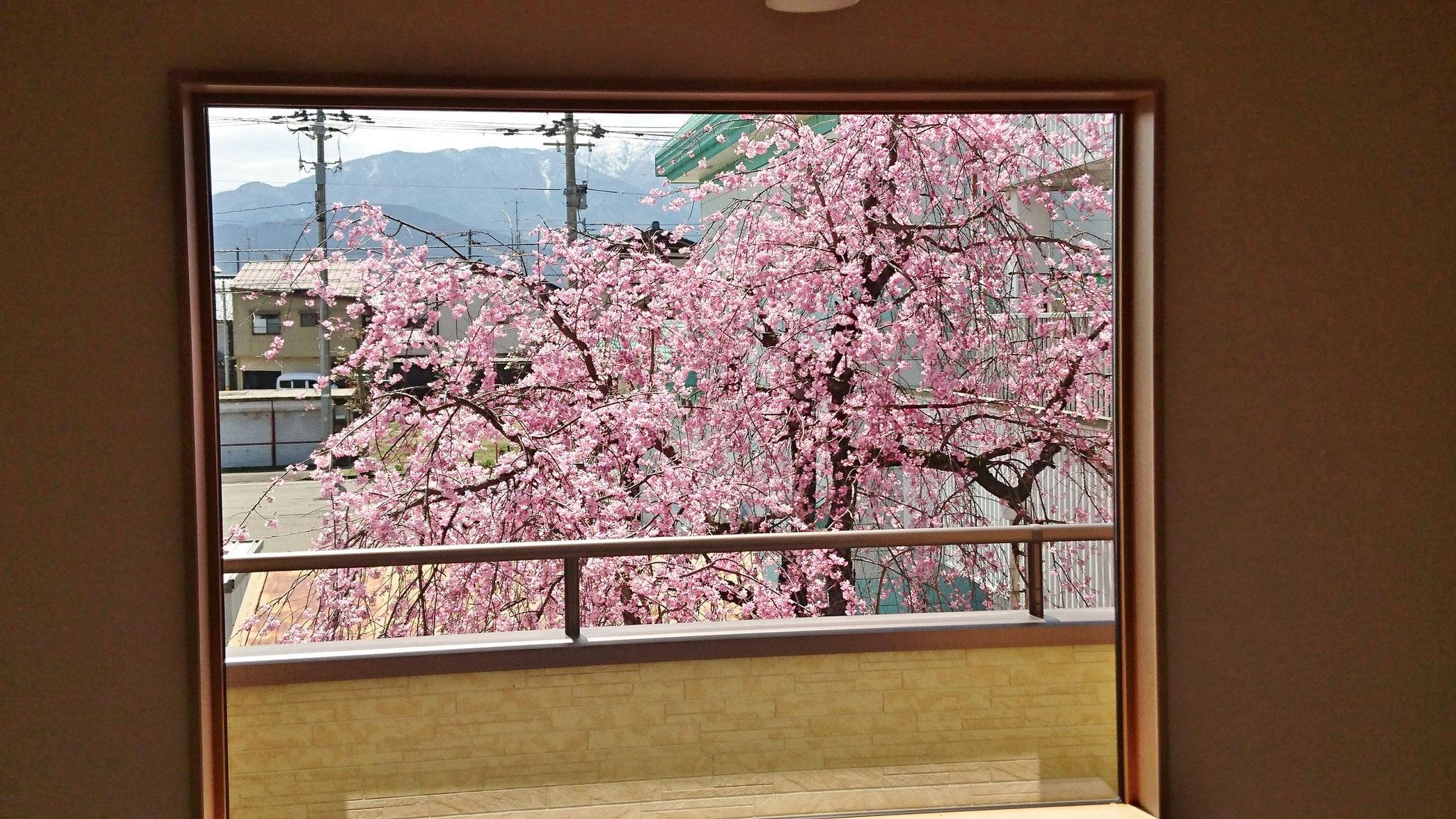 2階吹き抜けからの桜