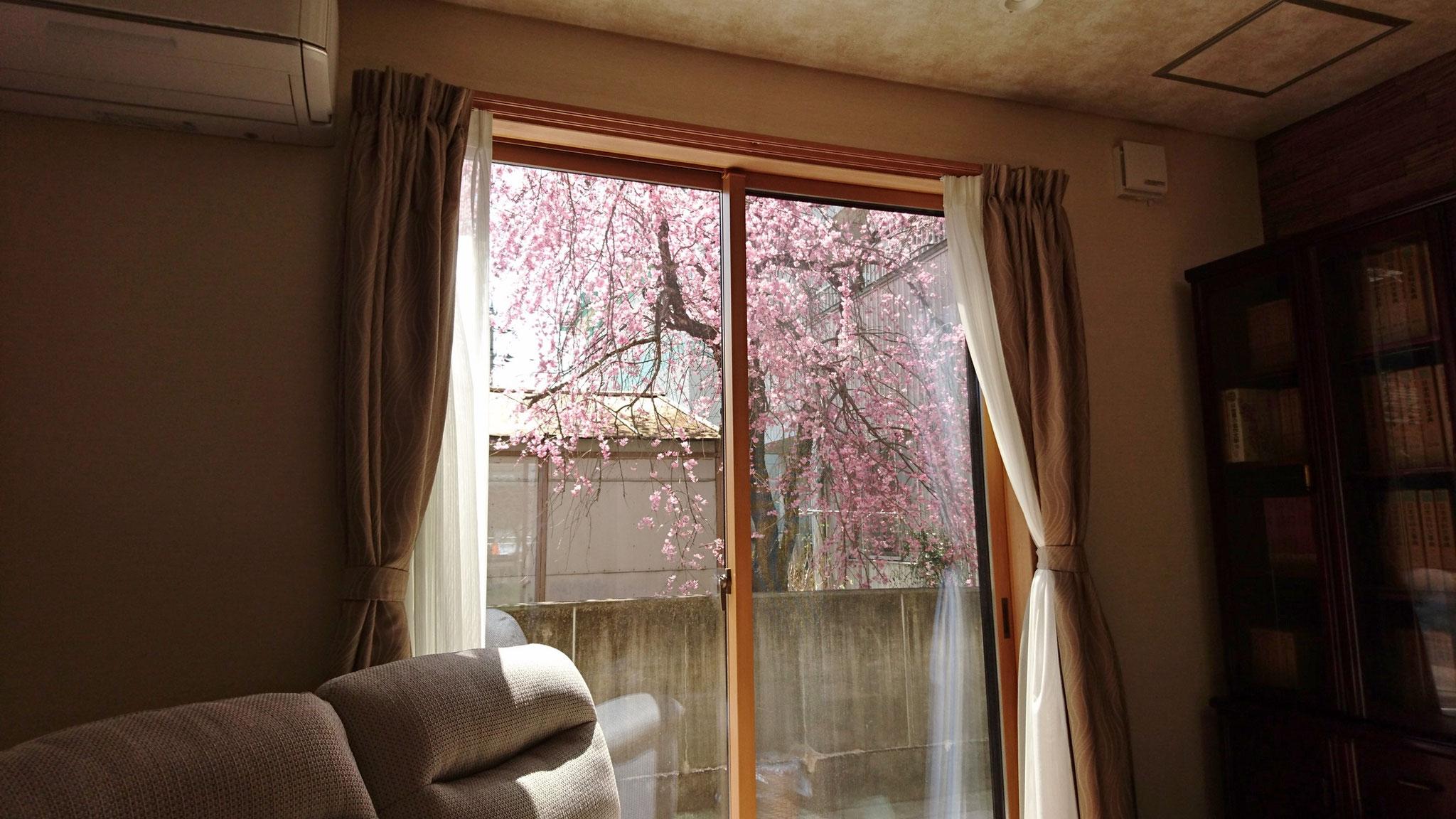 リビングからの桜 1