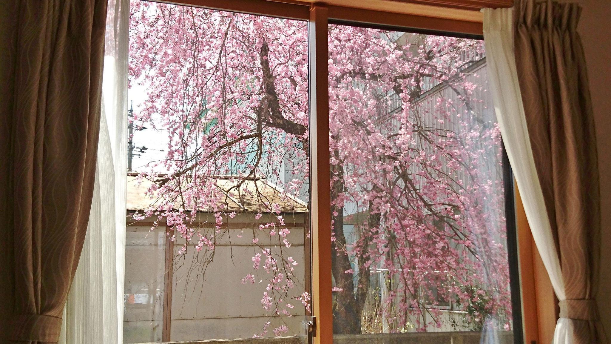 リビングからの桜 2