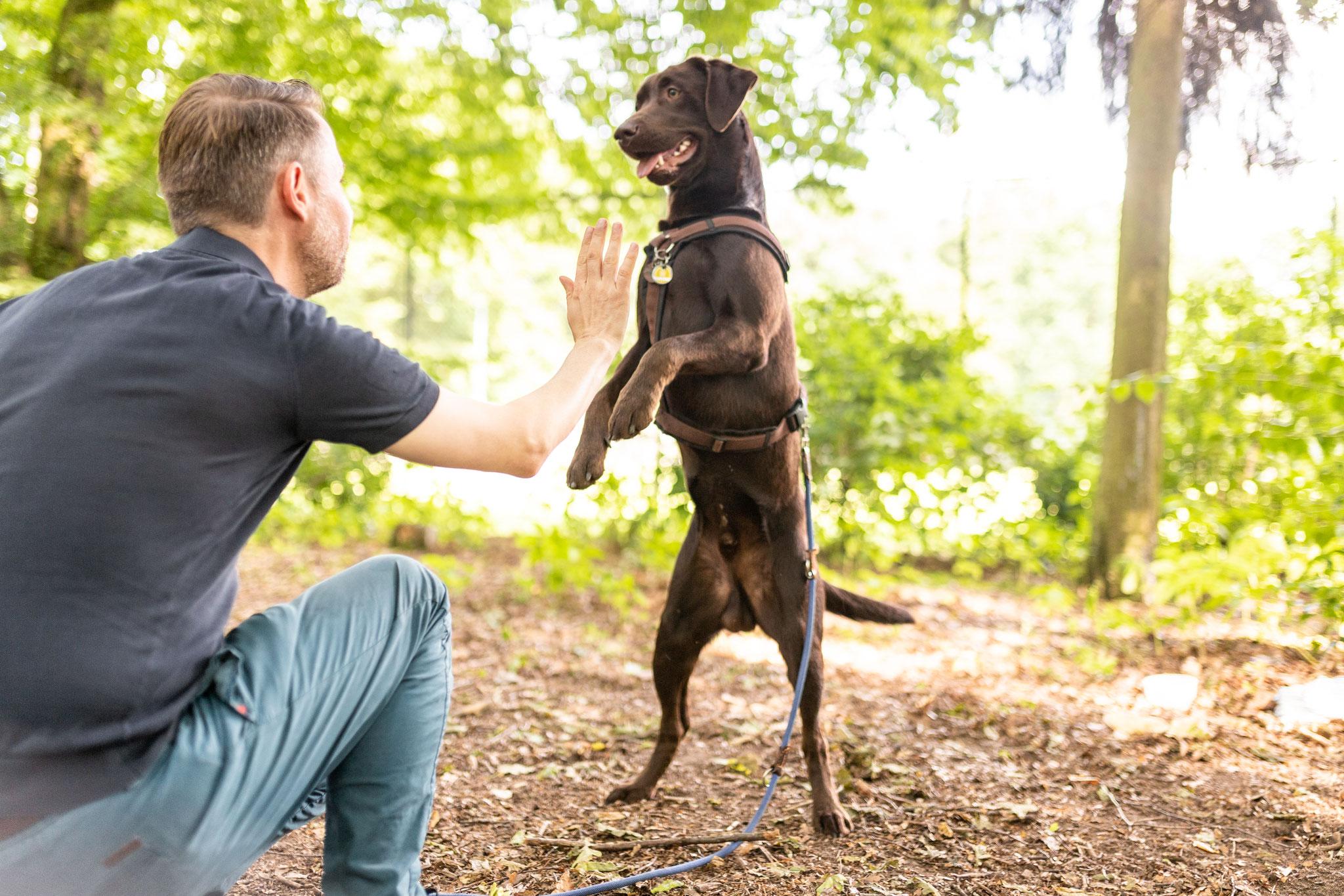 Ein Hund steht auf den Hinterbeinen vor seinem Herrchen, das per Handzeichen ein Signal gibt