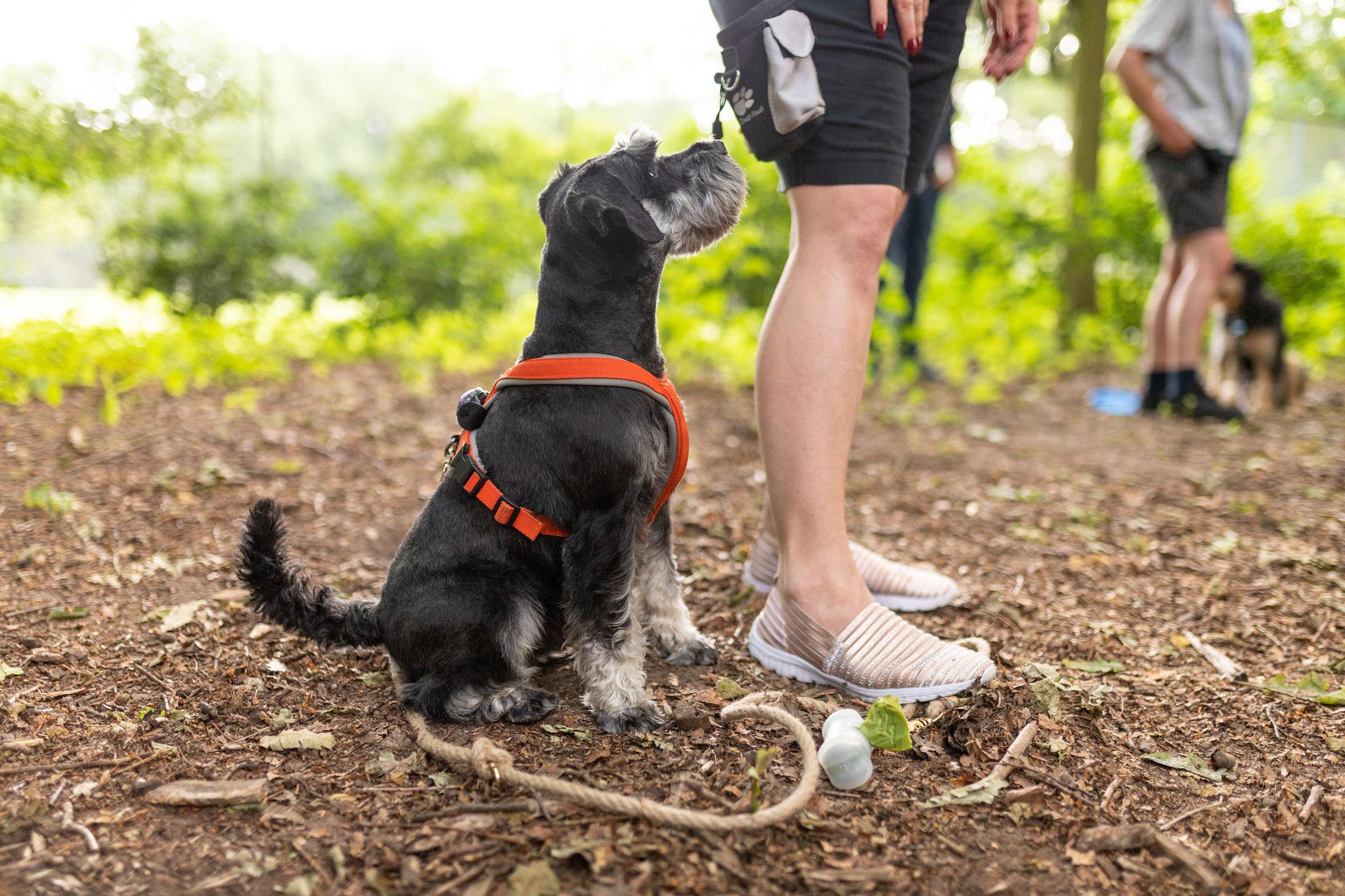 Ein Hund sitzt beim Aufmerksamkeitstraining im Hamburger Stadtpark neben seinem Besitzer