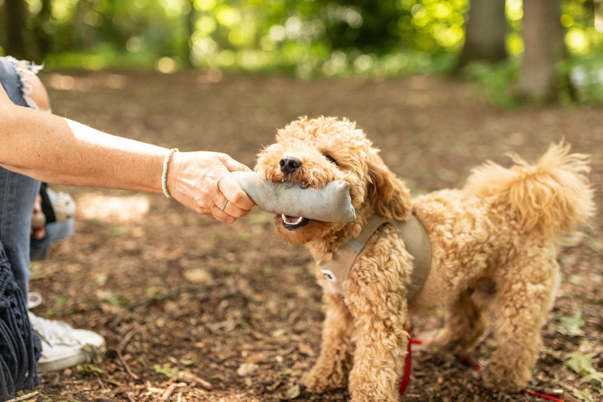 Ein Hund übergibt beim Fun-Walk seinem Besitzer einen Dummy
