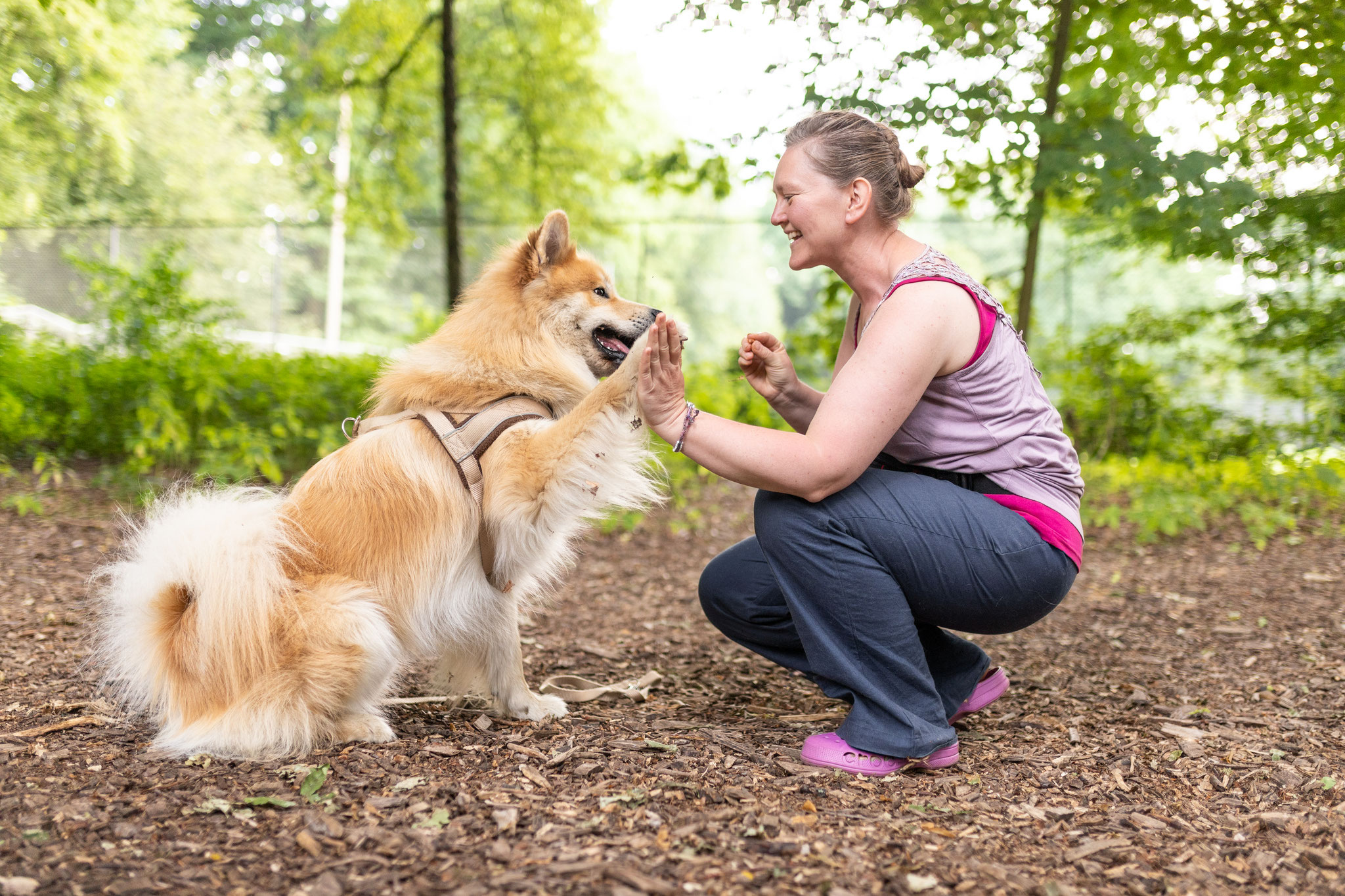 Ein Hund macht Sitz vor seinem Frauchen und gibt High Five beim Kurs Easy im Alltag von Rebeccas Hundetraining im Hamburger Stadtpark