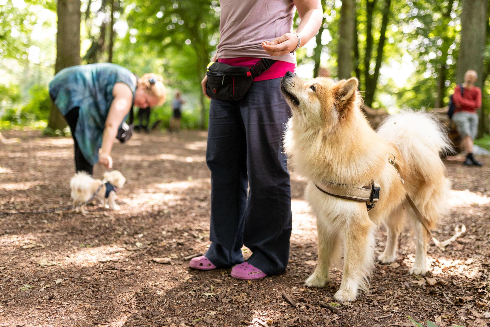 Ein Hund steht beim Kurs Alltagshelden neben seinem Frauchen und schaut zu ihr auf
