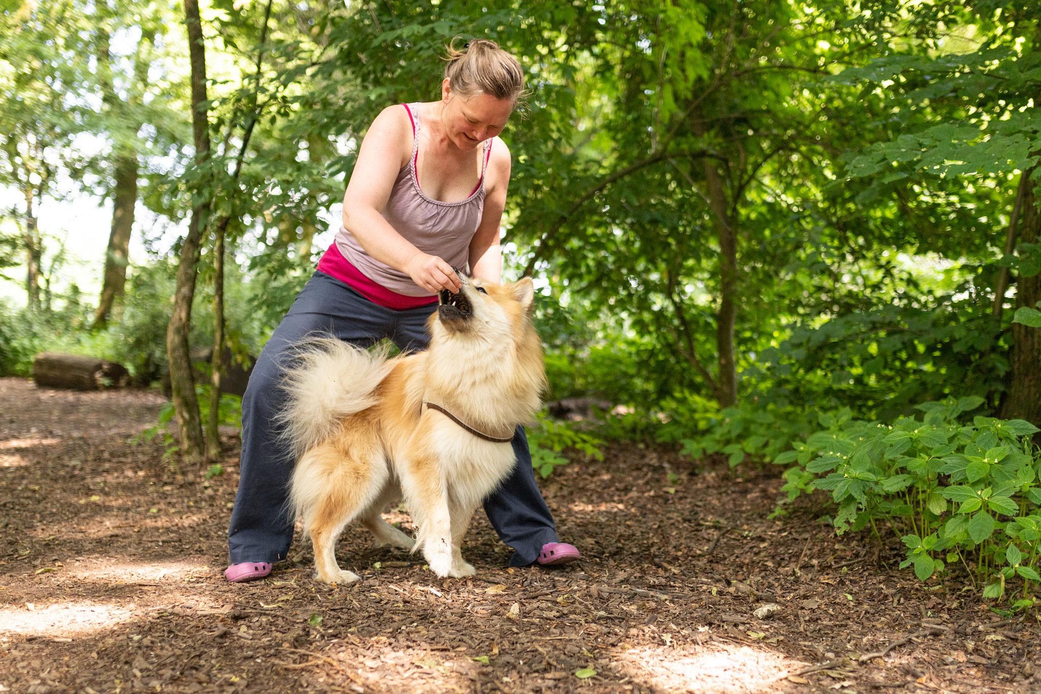 Eine Teilnehmerin übt mit ihrem Hund das Slalomlaufen durch die Beine beim Kurs Alltagshelden in Hamburg