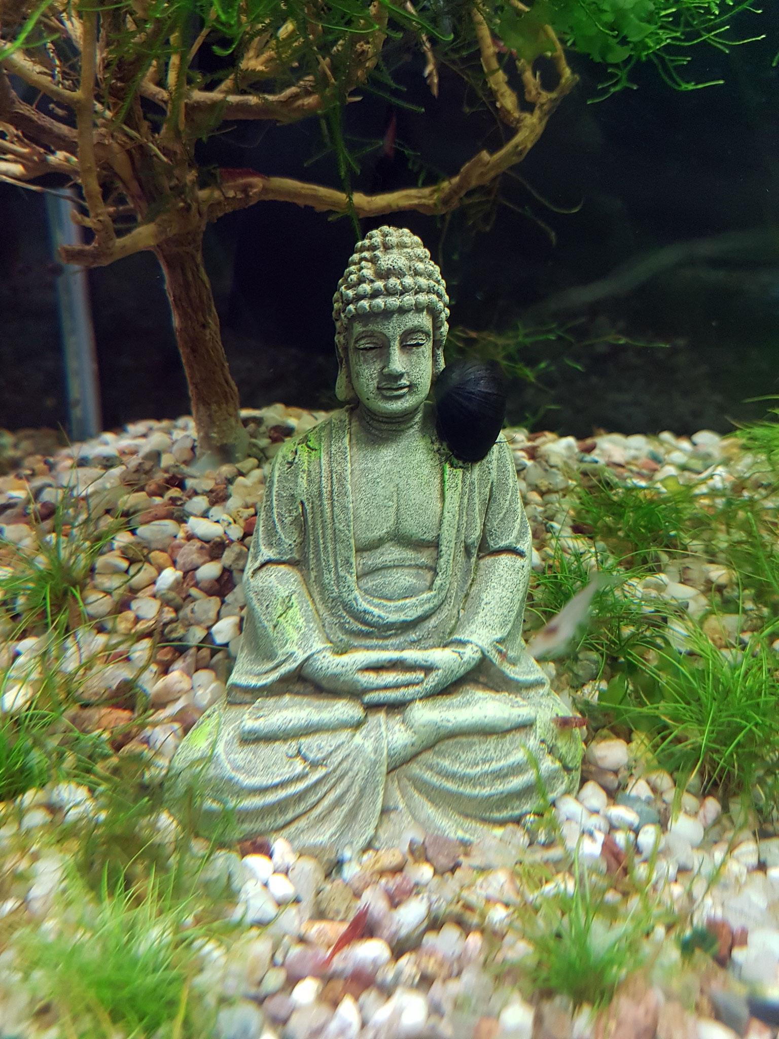 Buddha mit Rennschnecke