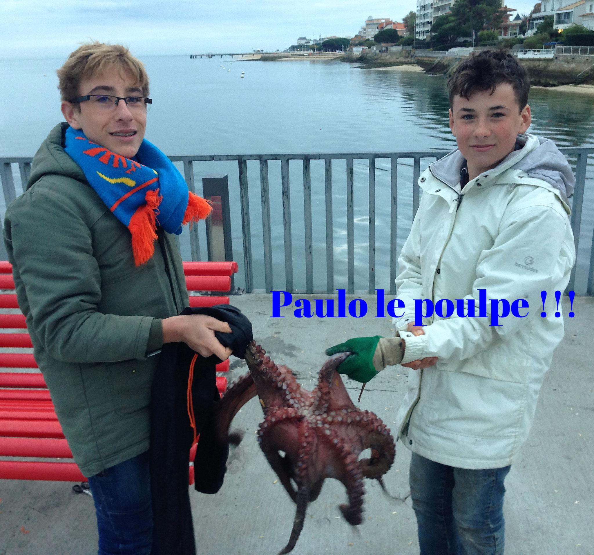 paulo le poulpe