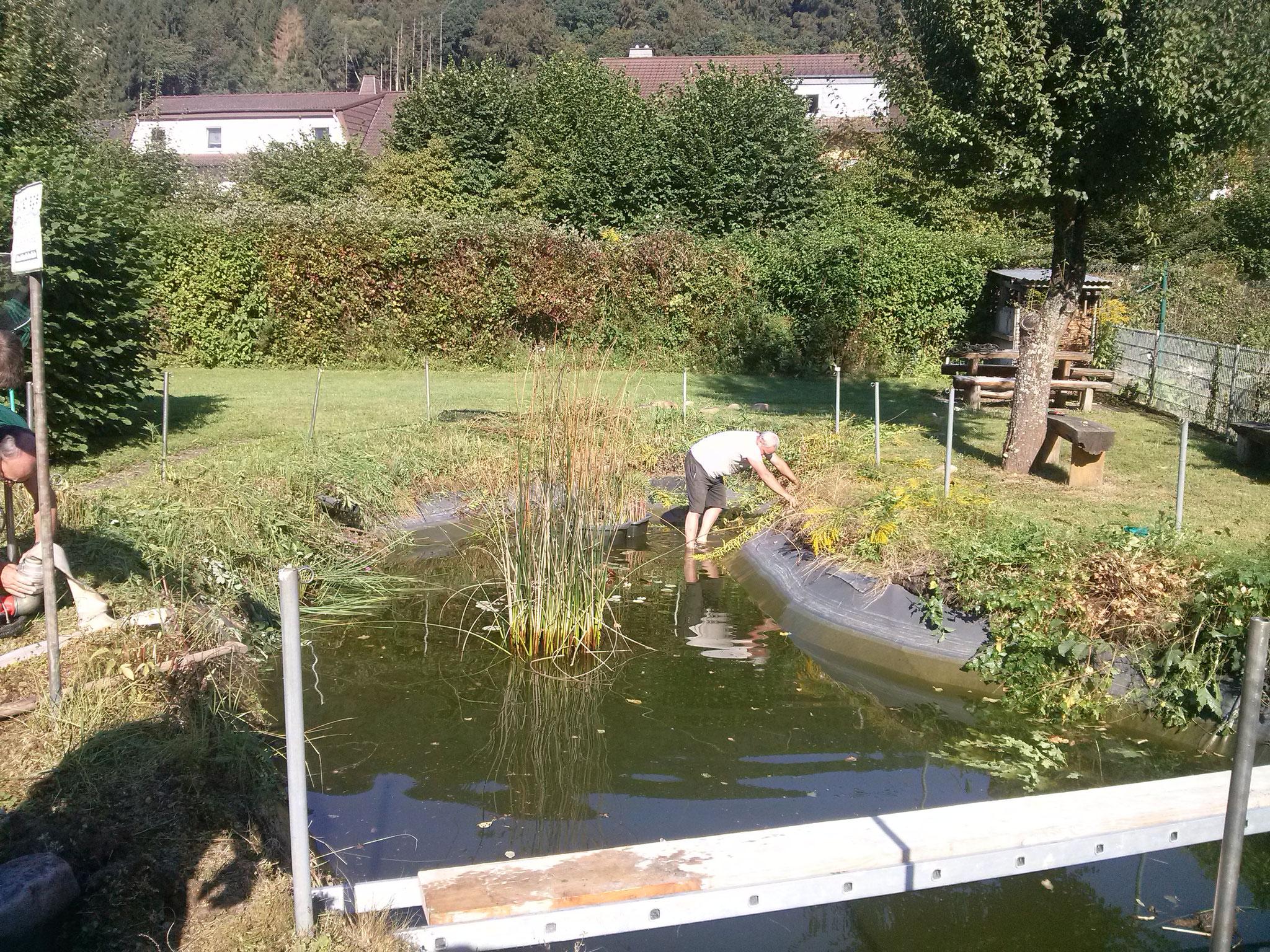 hier der noch gefüllte Teich ...  Armin zieht´s ins Wasser...