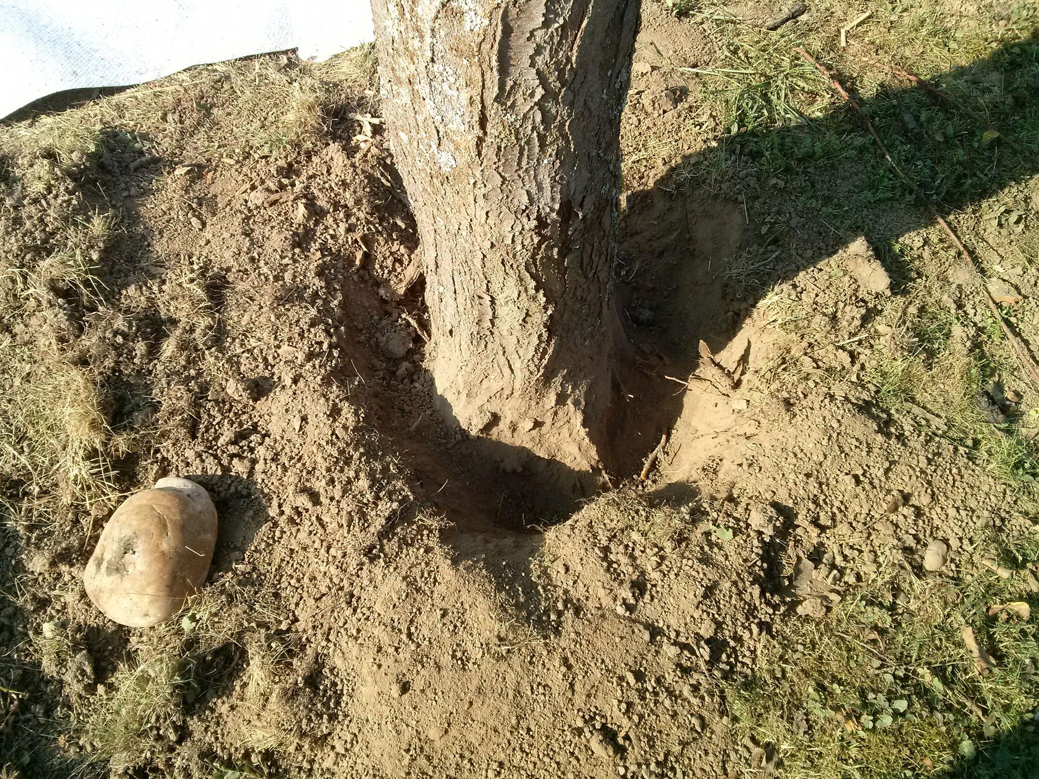 """Ach ja, der alte Baum stört, der hat mit seinen Wurzeln die alte Folie """"zerstört"""", passiert jetzt nicht mehr."""