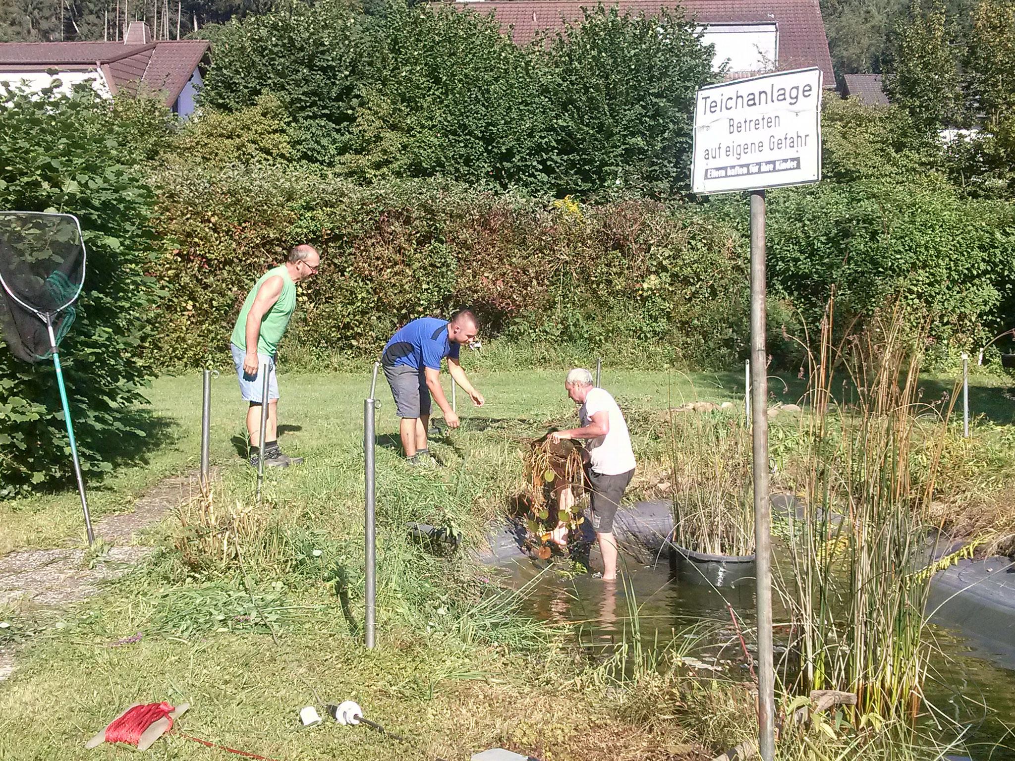Armin, Wolfgang und Kevin beim verbringen der Teich-Pflanzen ...