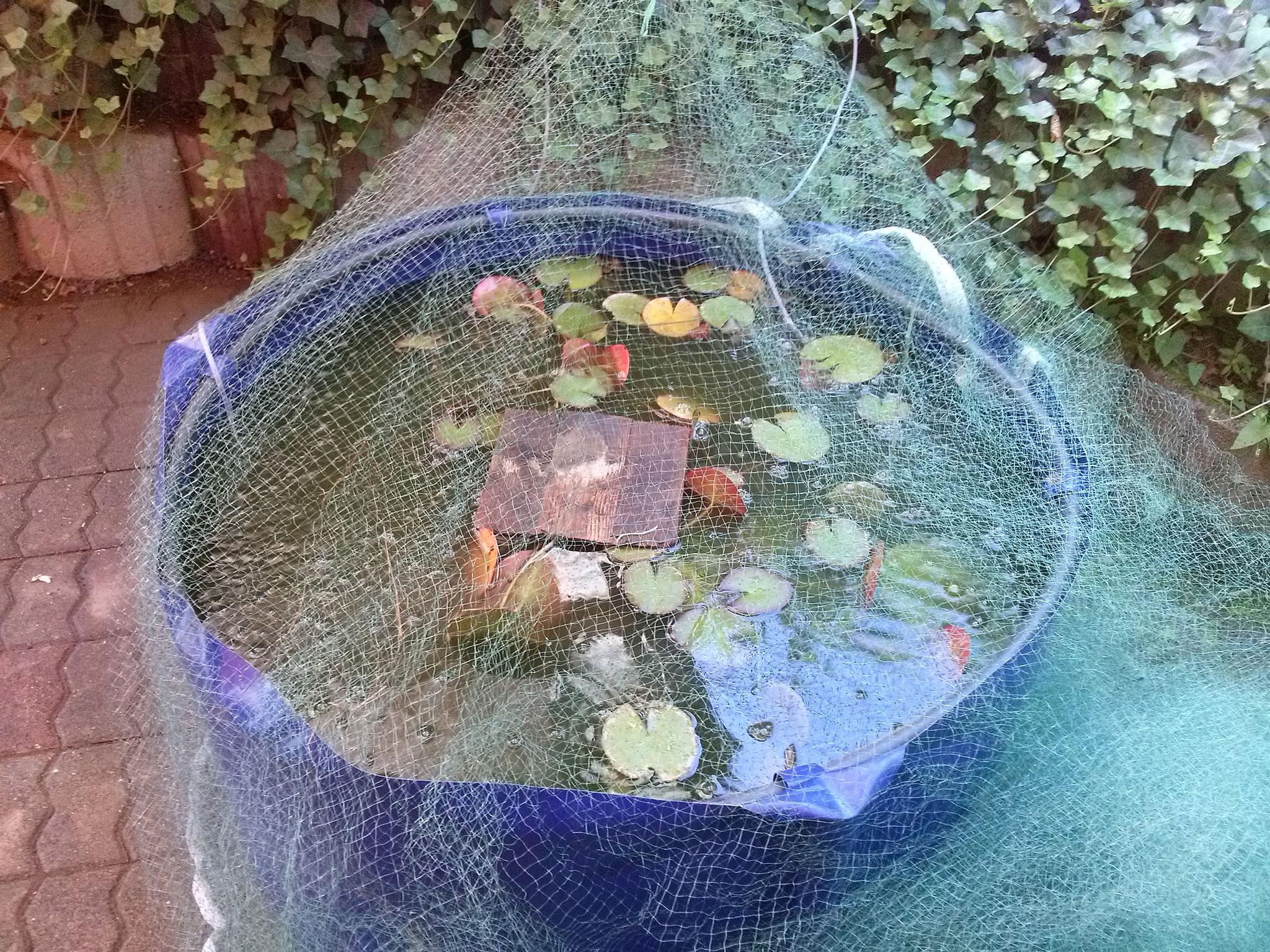 das Zwischenbecken!, das ist das zu Hause für Frösche und Fische für die nächsten Tage