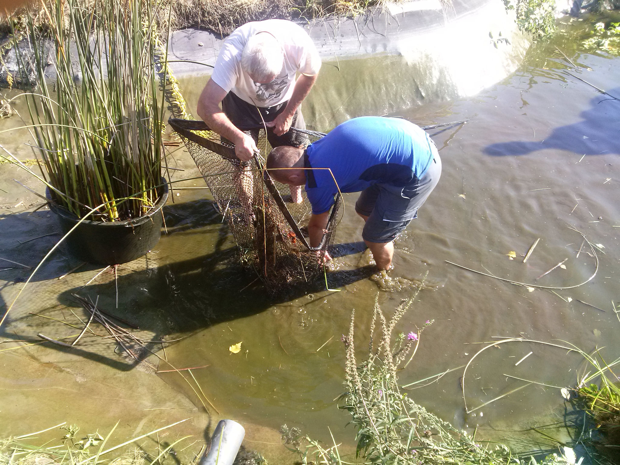 zunächst geht alles gut, Fische werden gefangen und umgesetzt