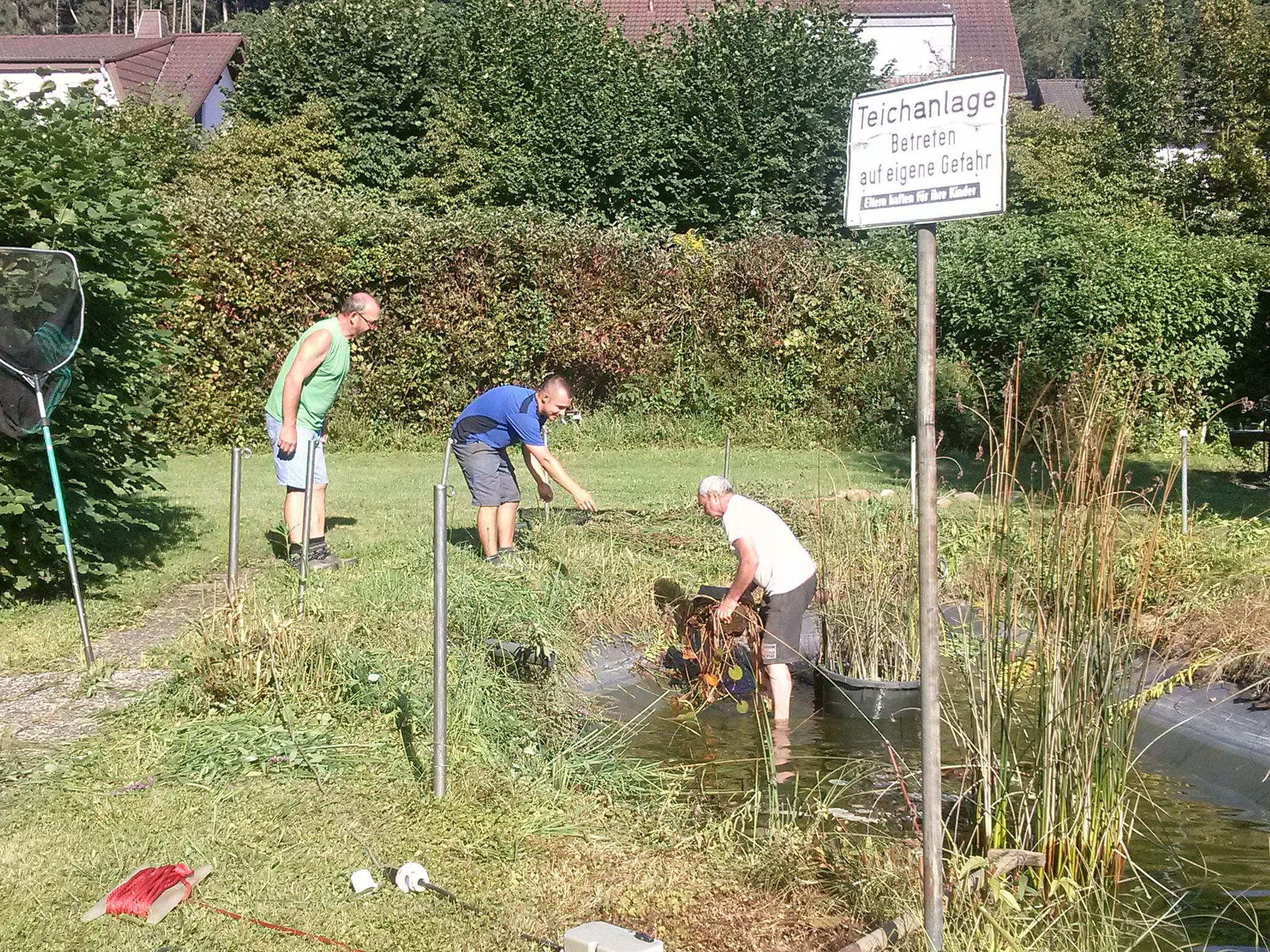 Armin, Wolfgang und Kevin beim verbringen der Teich-Pflanzen