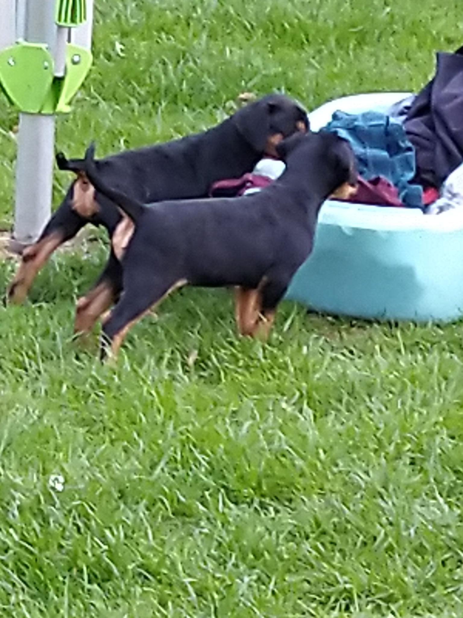 Luna und Bausa untersuchen die Wäscheschüssel