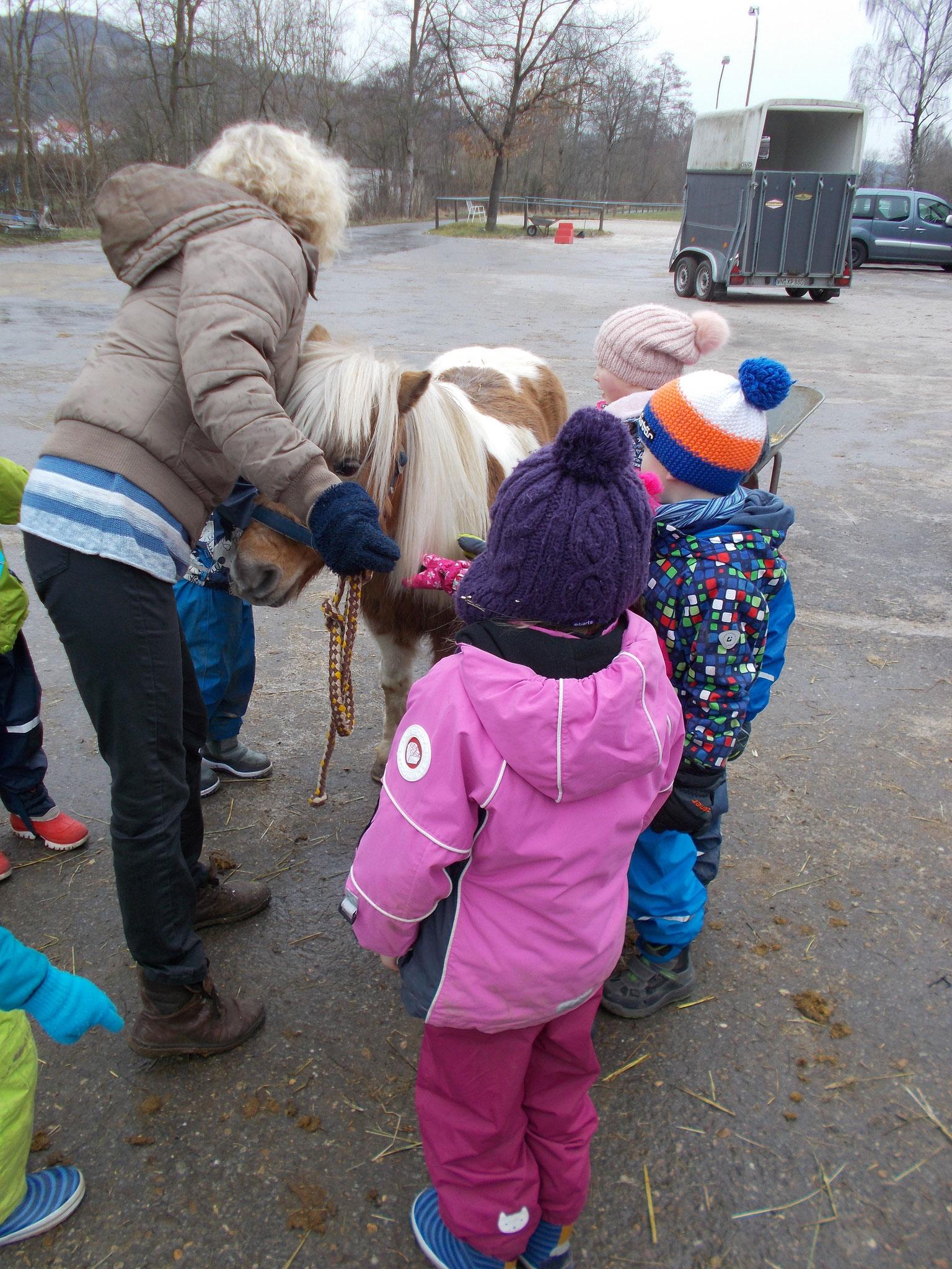 Pferd auf Augenhöhe - die kleine Nora hat genau die richtige Größe.