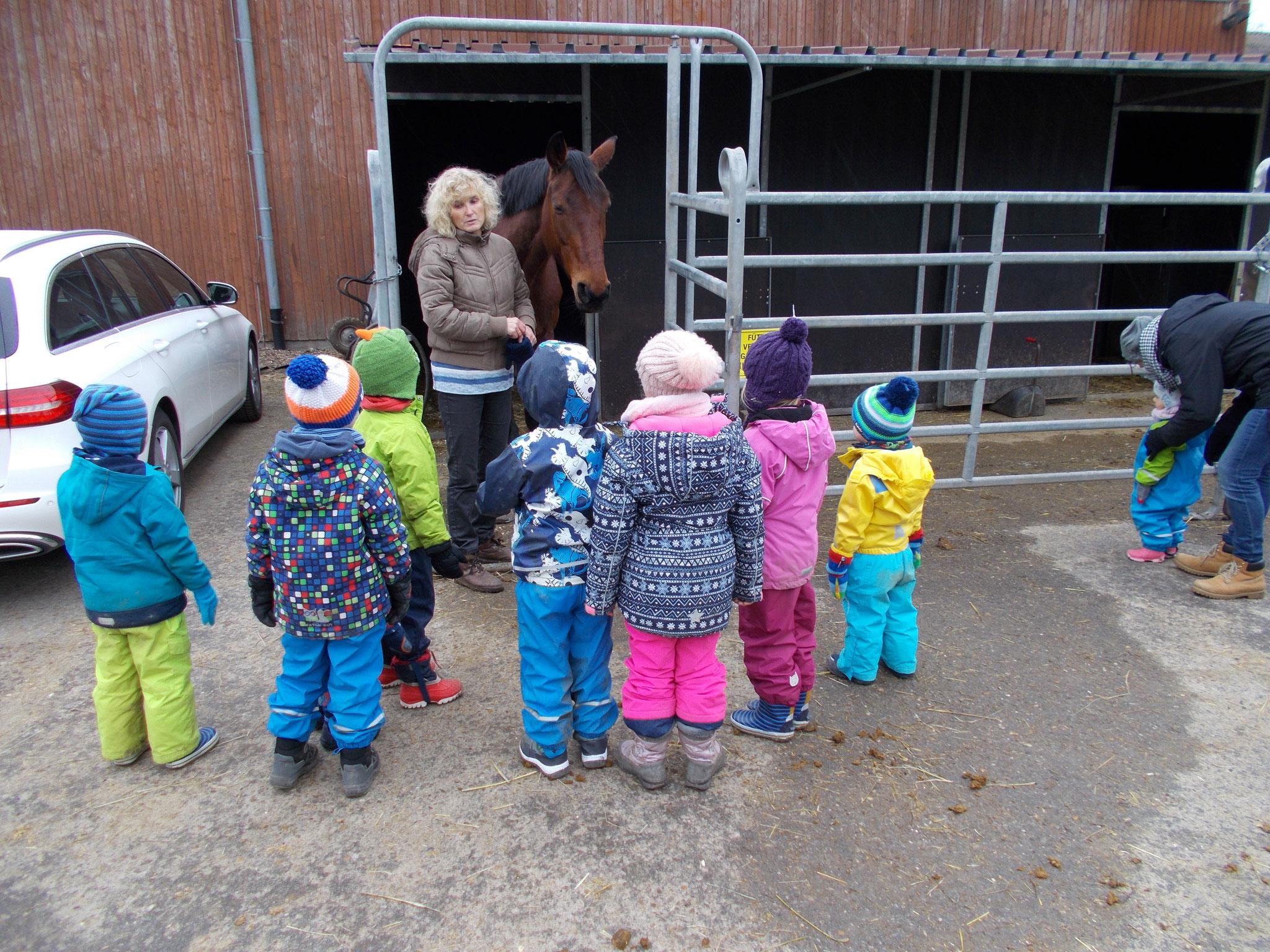 Heidi Brandt erzählt grundsätzliches über Pferde.