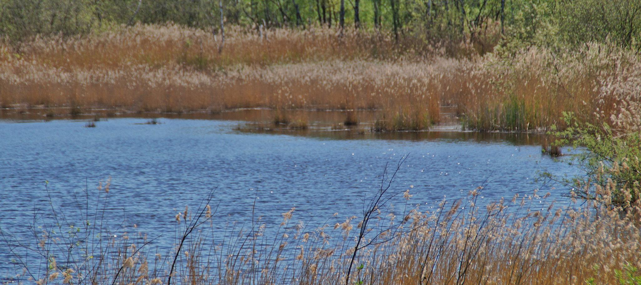 Naturschutzgebiet am Kanal