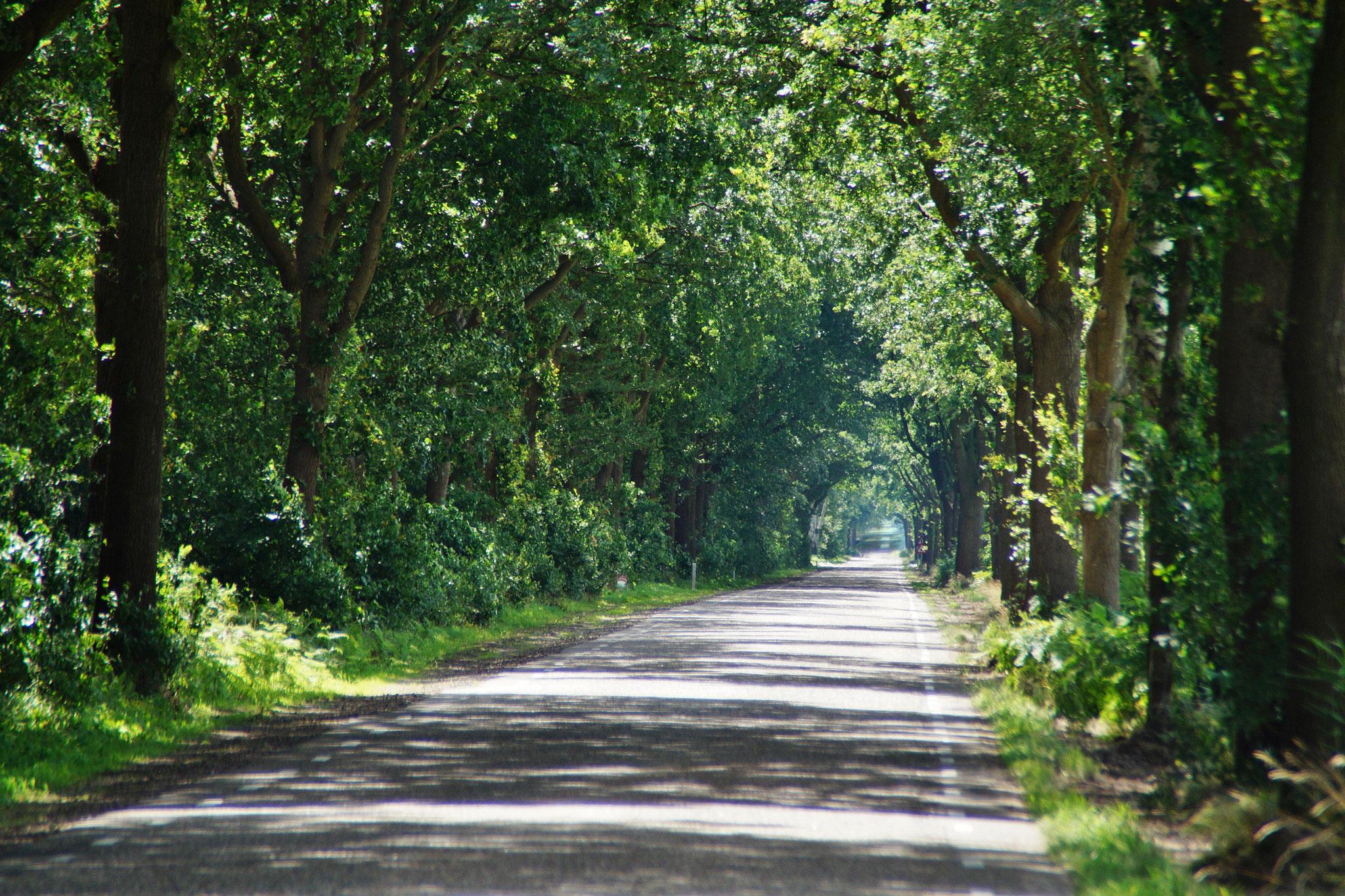 Der Schatten der Bäume bringt Abkühlung