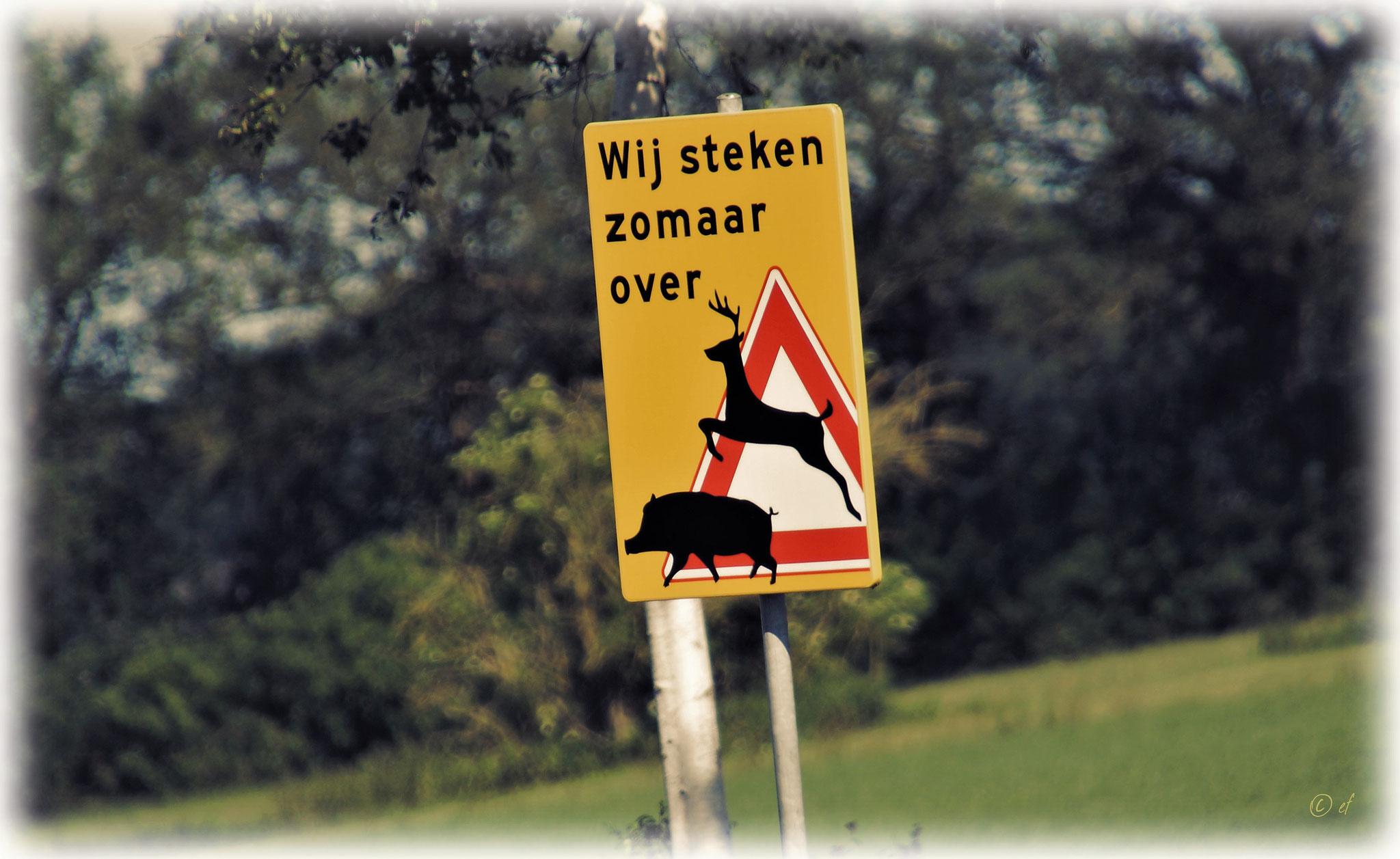 Wildschweine & Rehe können den Weg kreuzen