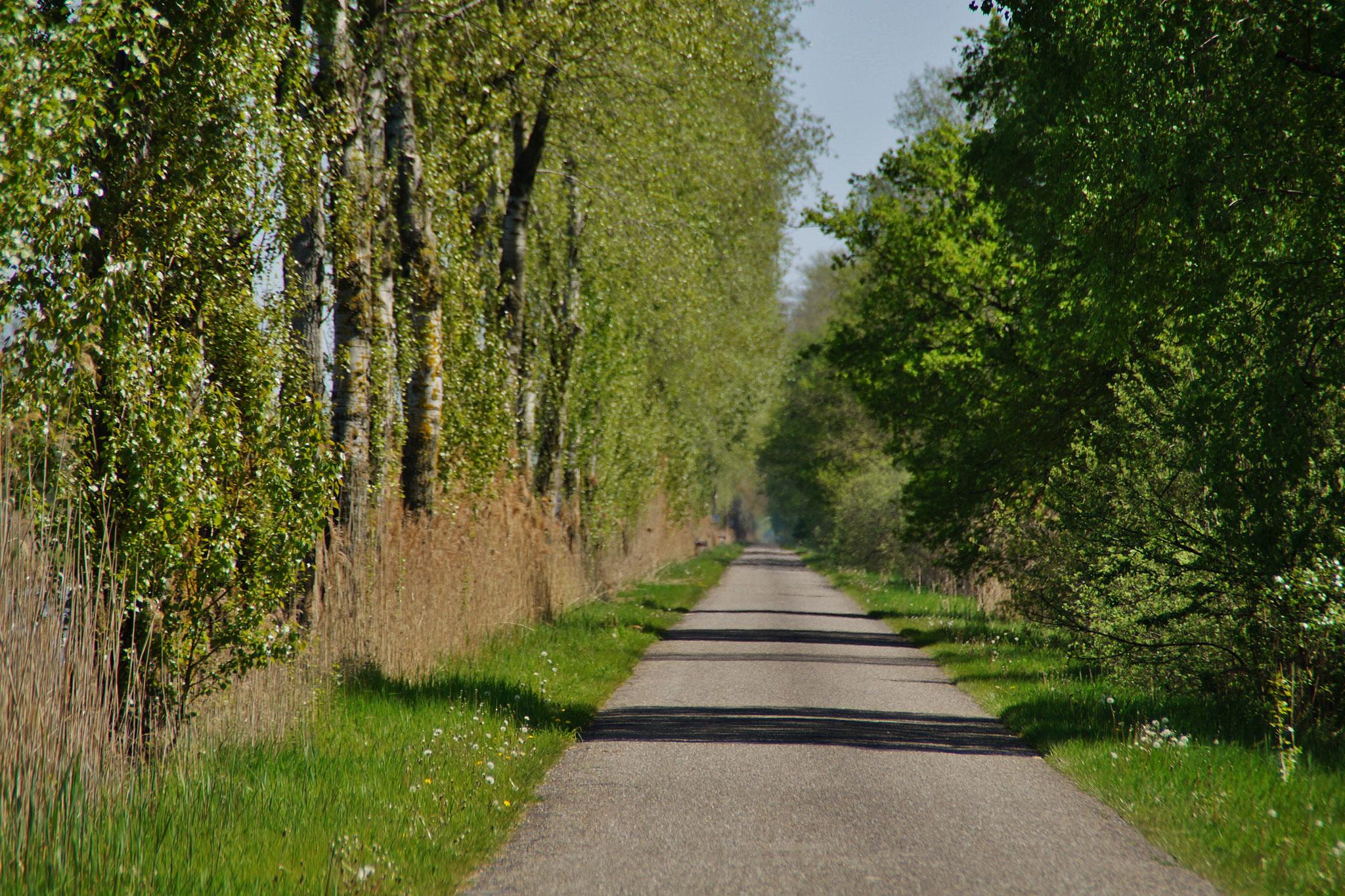 Alte Straße nach Lozen (B) am Kanal entlang