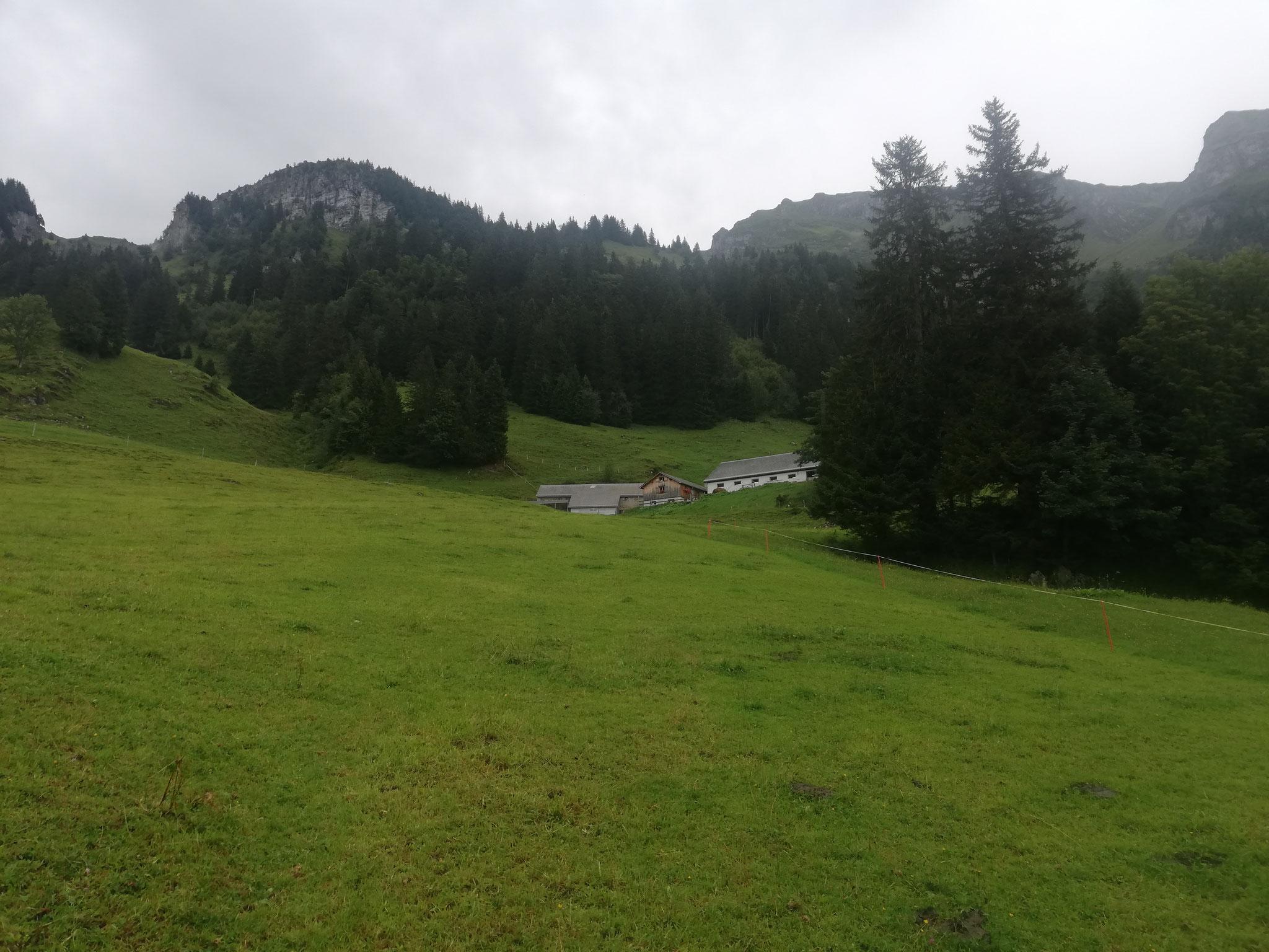Alp Heuboden GL (Mittelstafel)