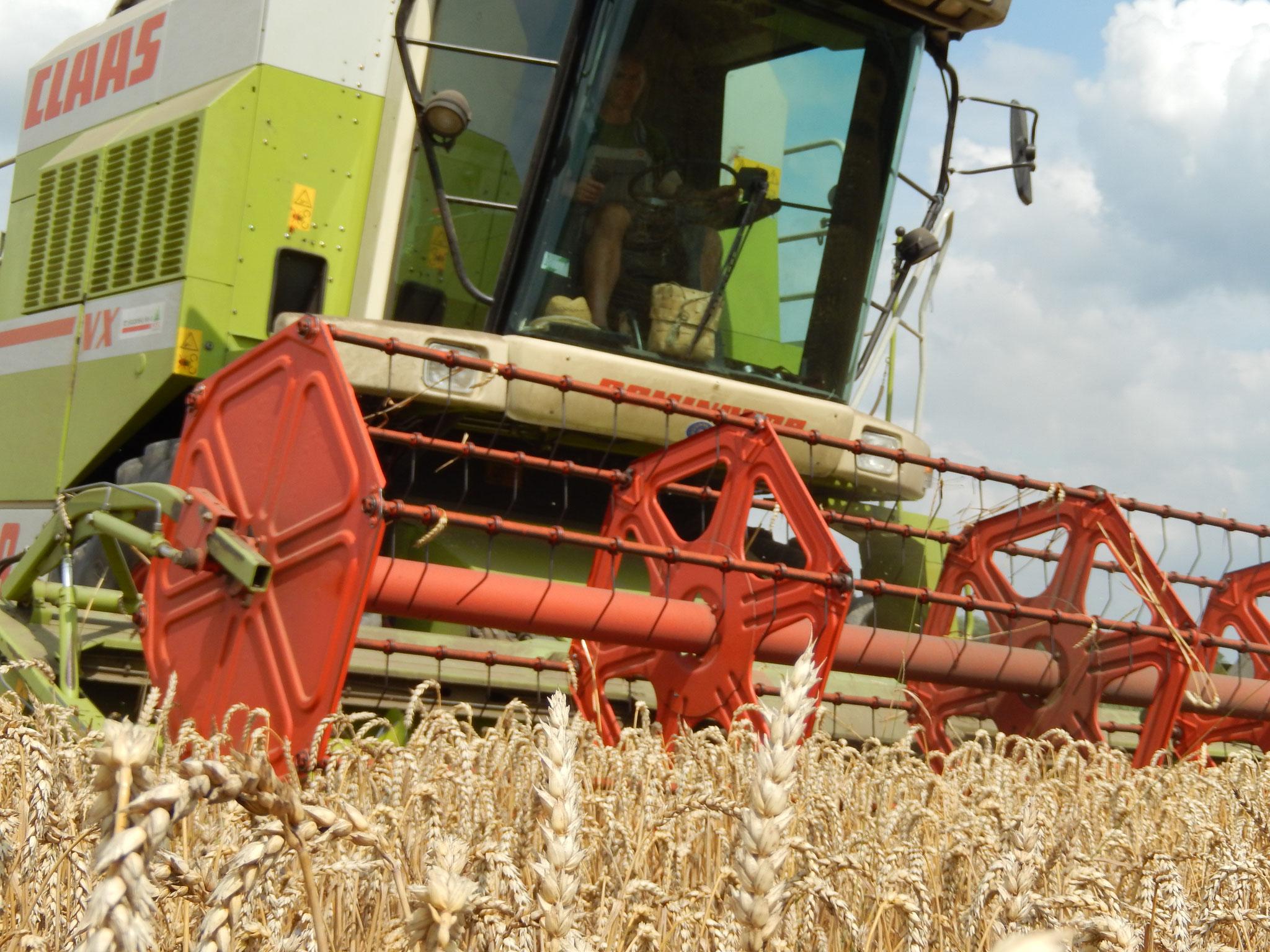 In der Landwirtschaft zu arbeiten bedeutet, mit und in der Natur zu arbeiten. Geregelte Arbeitszeiten haben hier Seltenheitswert. In der Erntezeit müssen nicht nur die Maschinen laufen. Auch der Landwirt läuft von  morgens bis abends, Montags bis Sonntag.