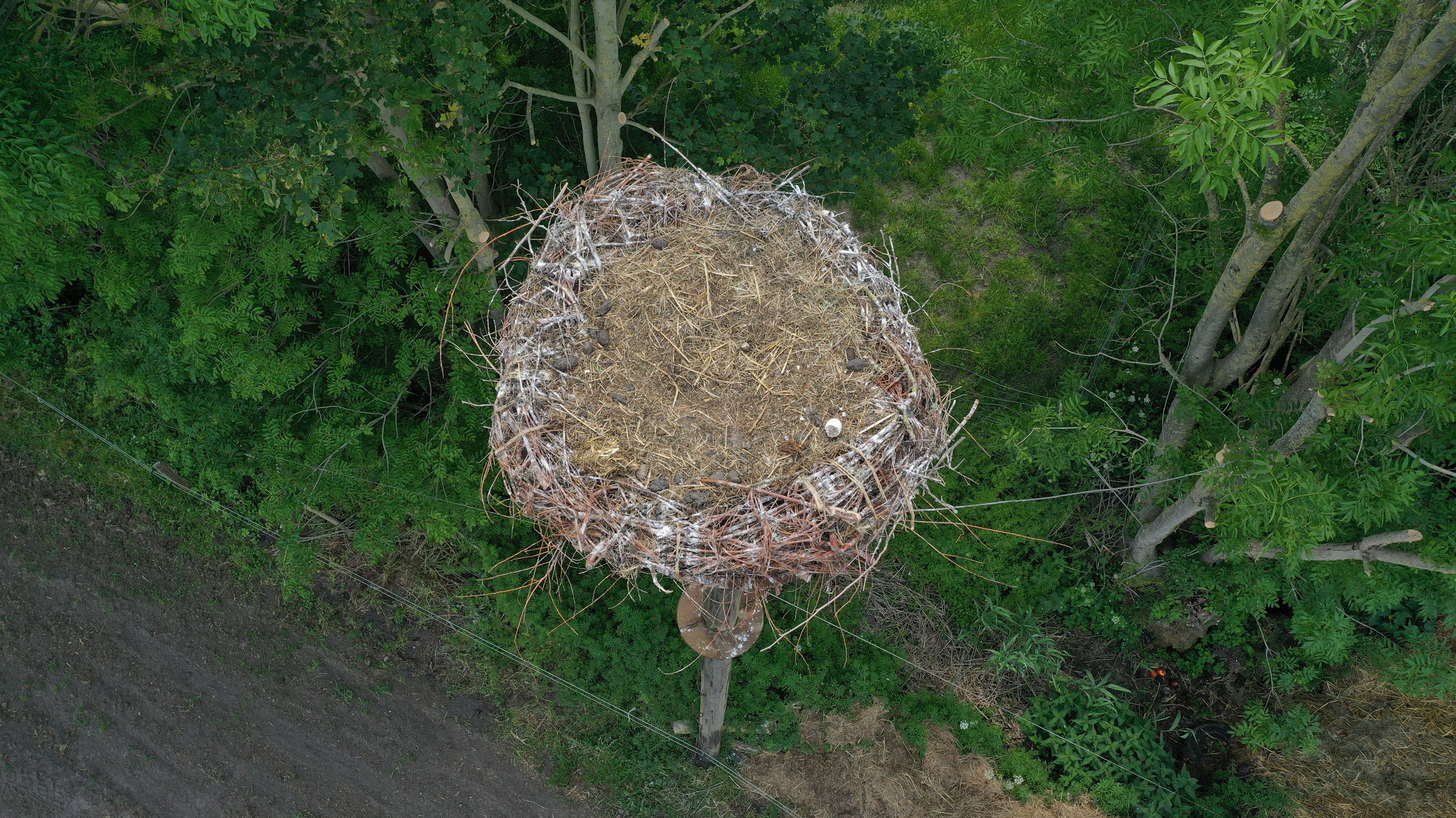 2. Juni 2020. Bedauerlicherweise hat das Storchenpaar das Nest verlassen. Das Küken scheint aus dem Nest geraubt worden zu sein. Sehr schade!
