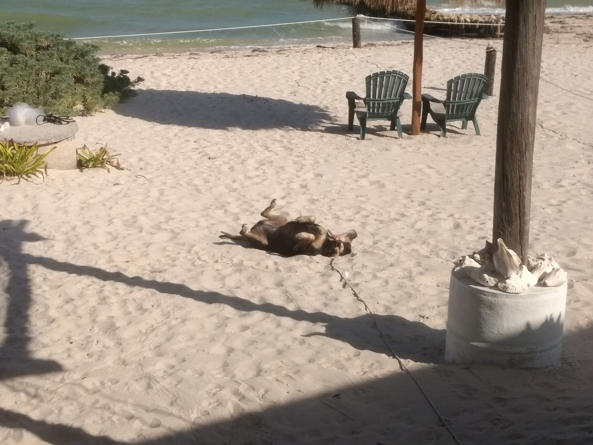 O simplemente tumbarte al sol