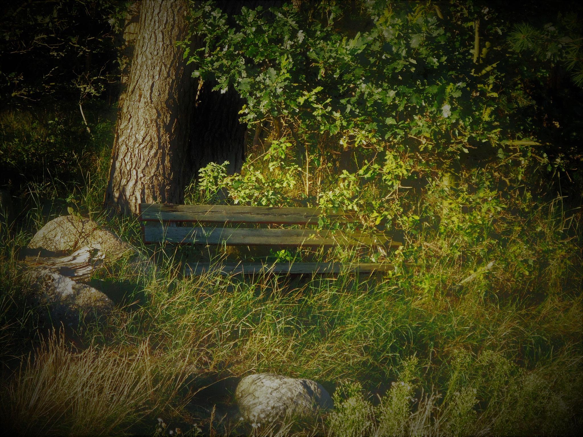 Juni: Ruhe unter einem alten Baum-Bestand.