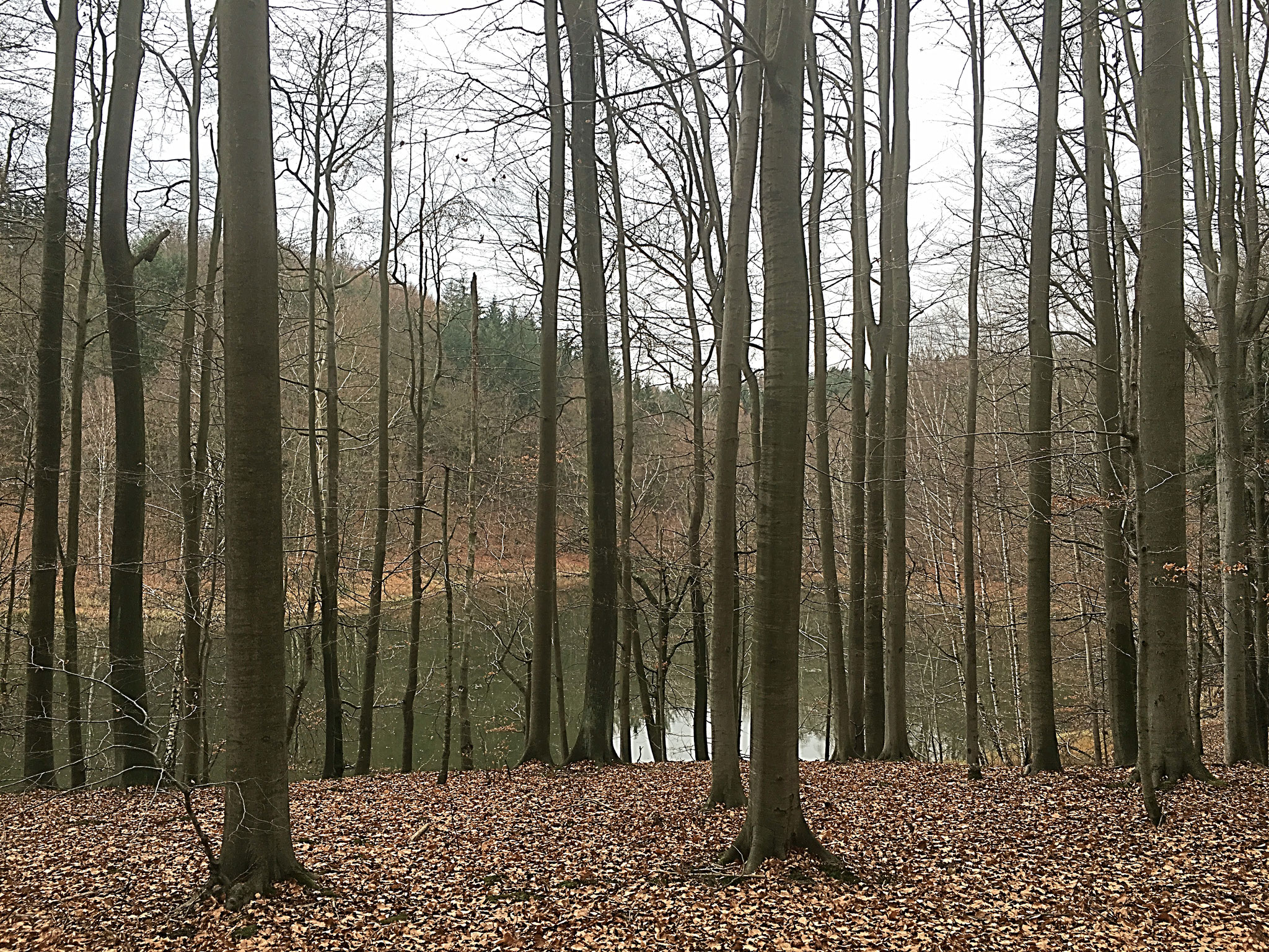 Laubwald im Winter