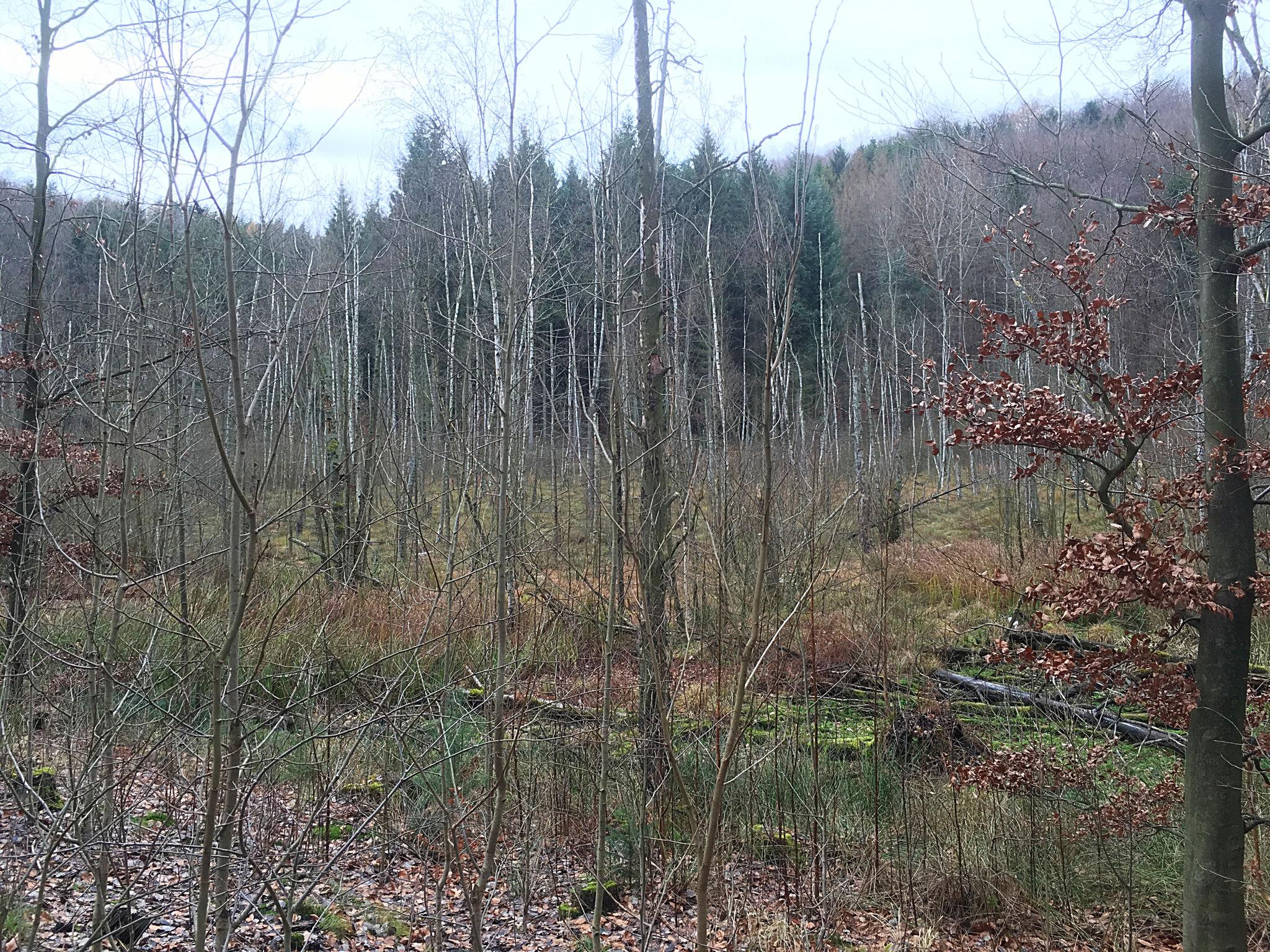 Baasee-Moor