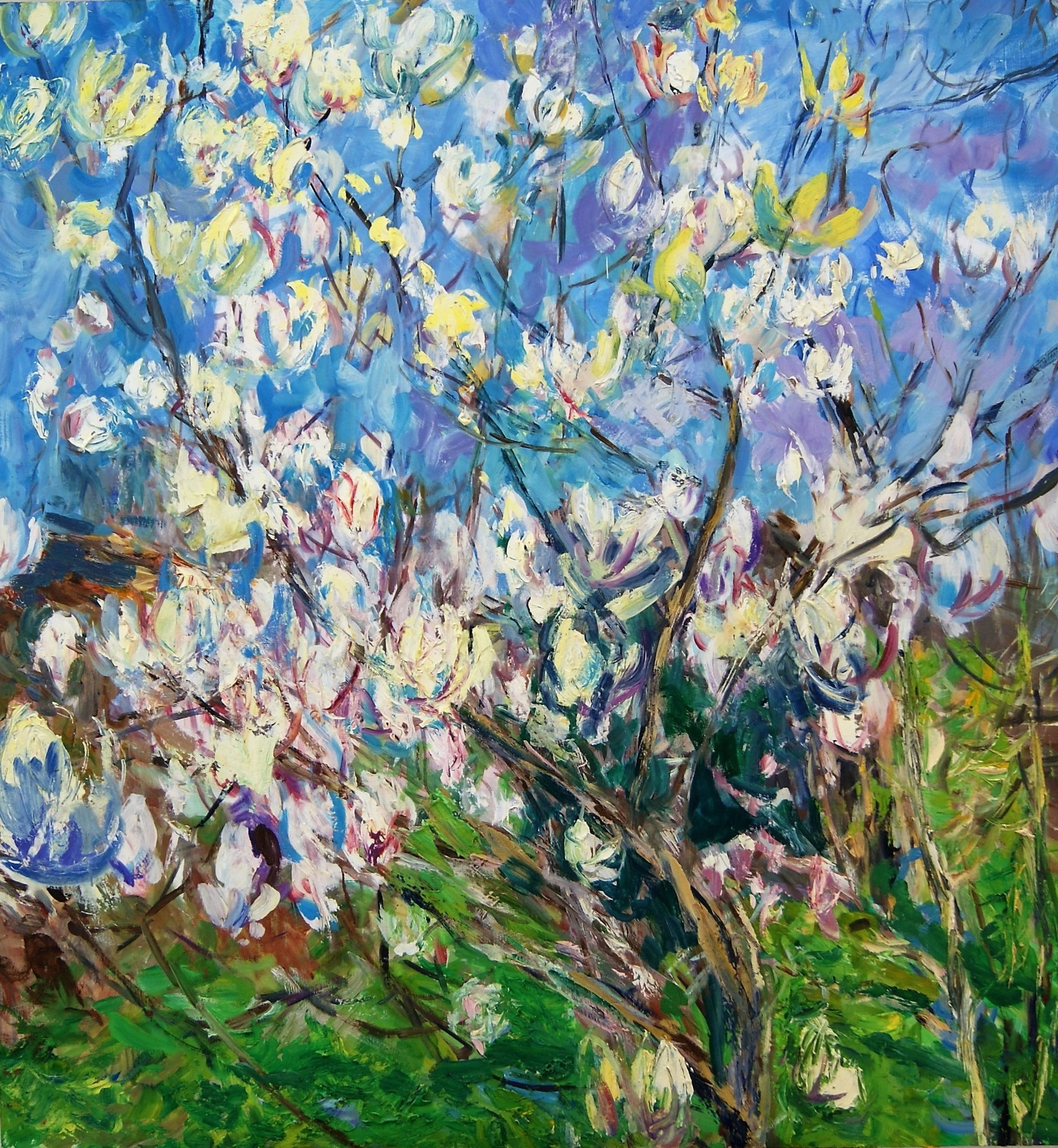 Magnolia, early Spring  130x122cm
