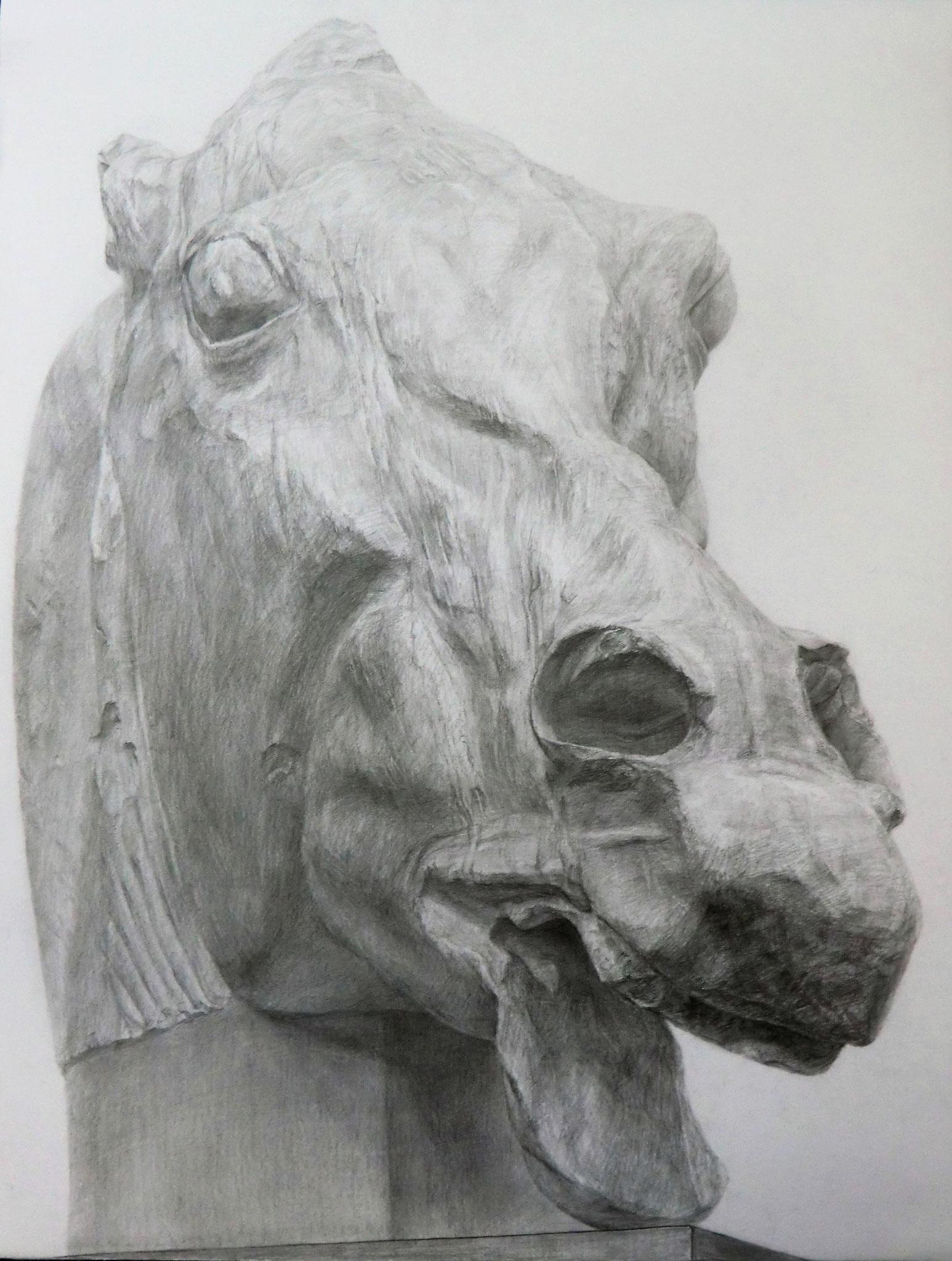 生徒作品10 鉛筆デッサン<セレネの馬> 630×480mm 白象紙 【日本画系】