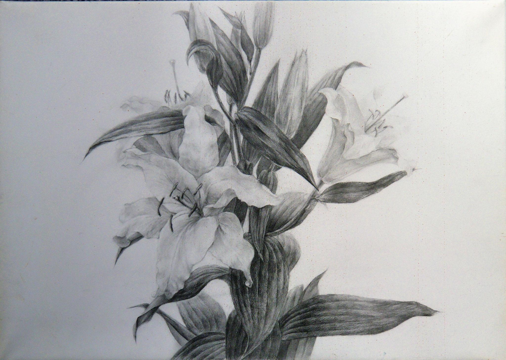 生徒作品49 鉛筆デッサン<植物> B3判 TMKポスター紙 【油画系】
