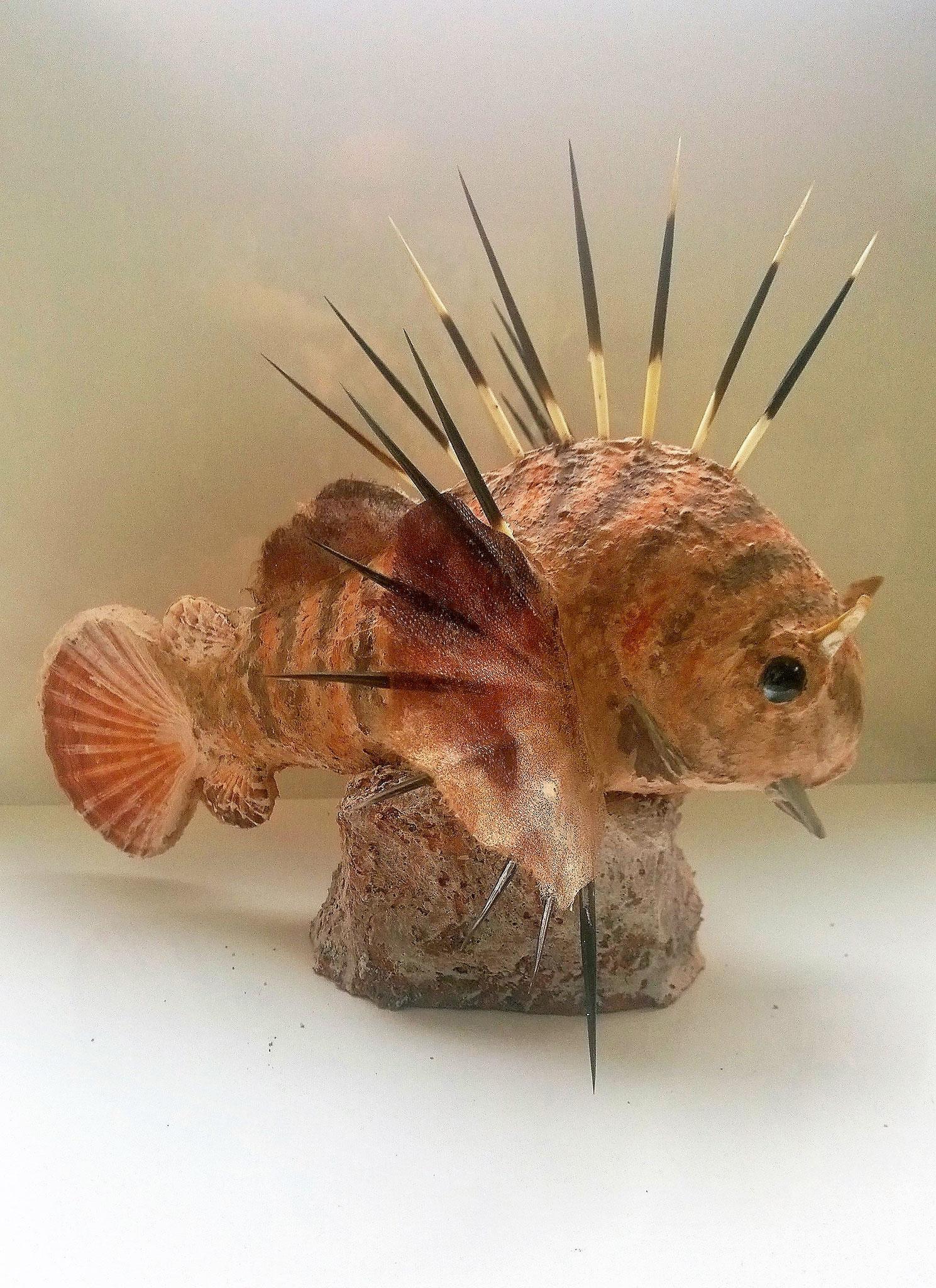 Löwenfisch 35h x 40l x 40b