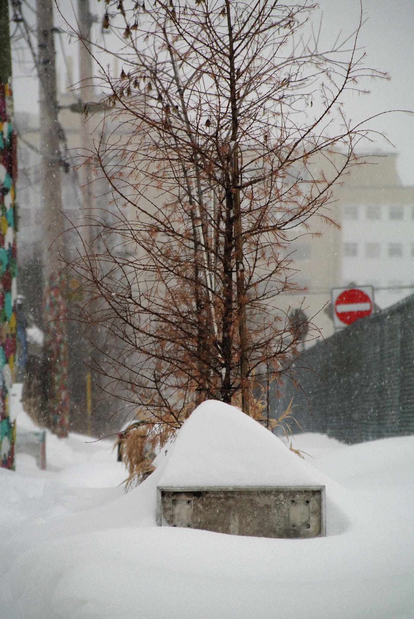 Bac à fleur résistant aux hiver du Québec sont 100% alumimium